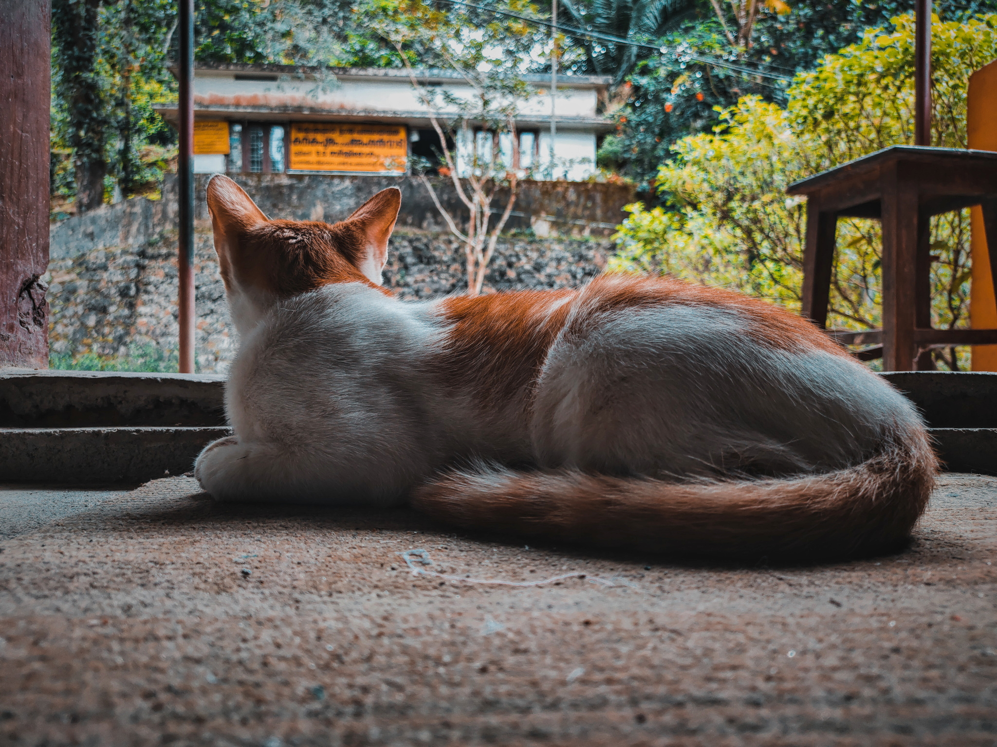 Cat Waiting and Sitting