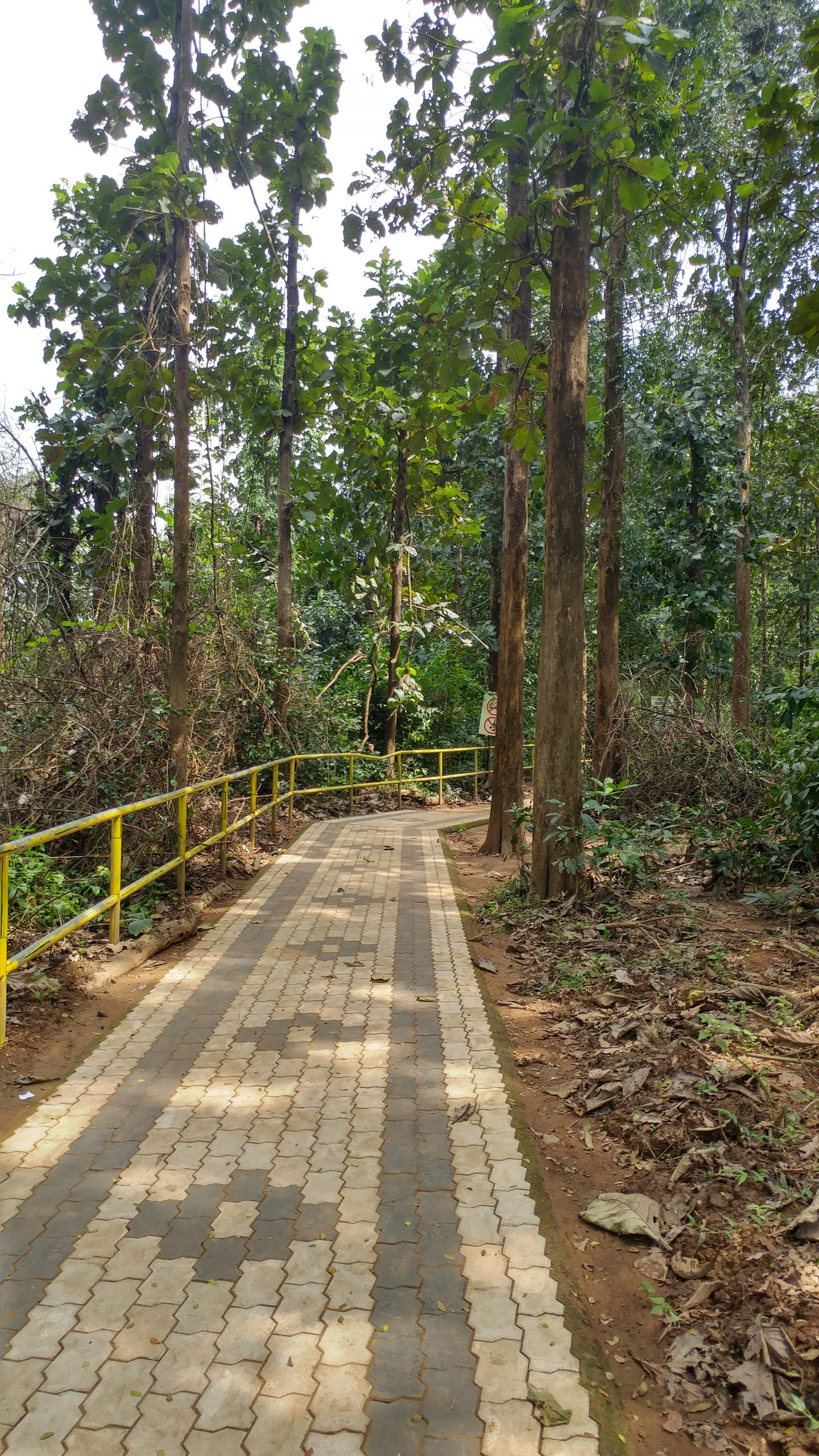 Walkway in the Forest