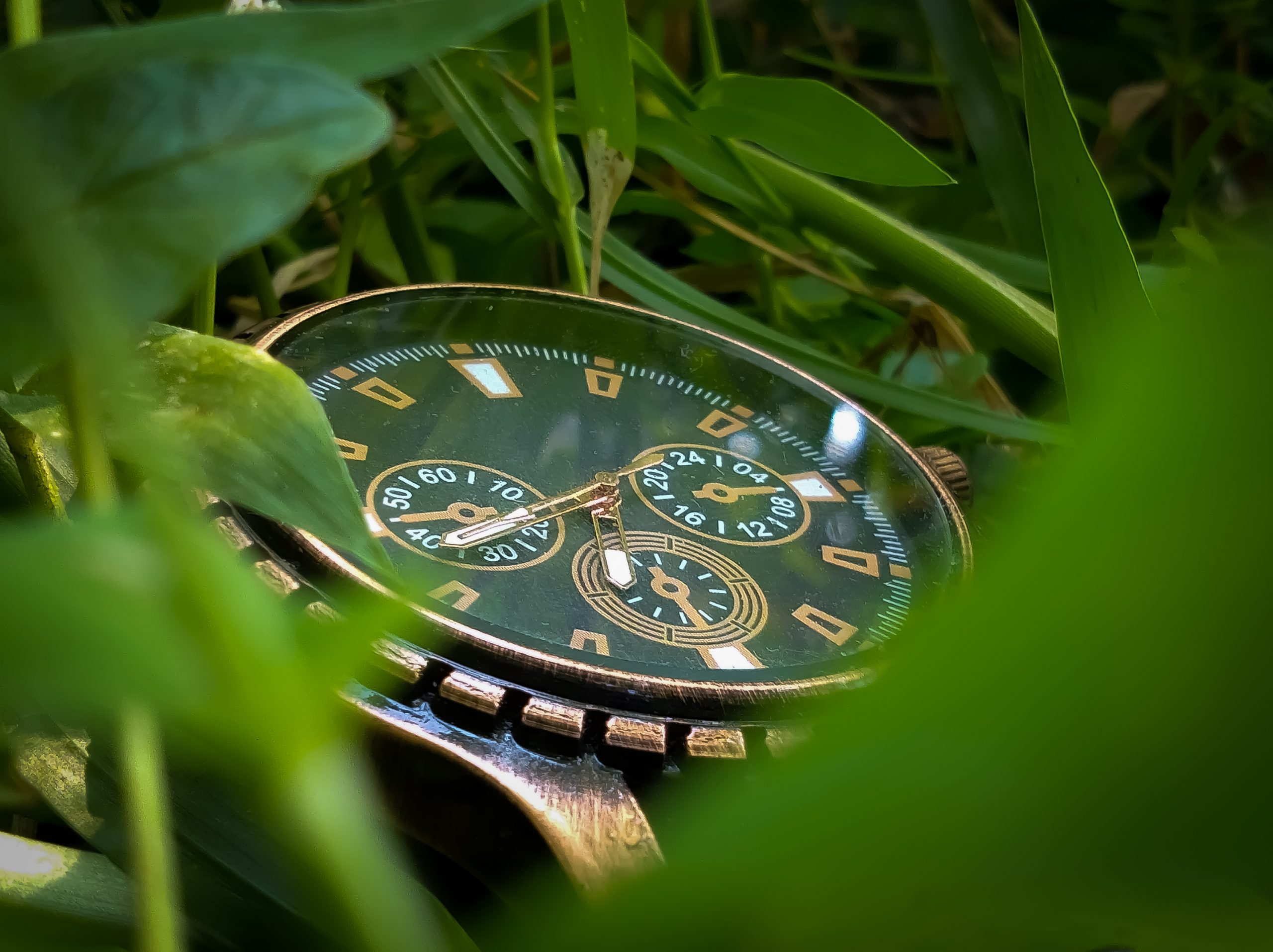 Watch in grasses