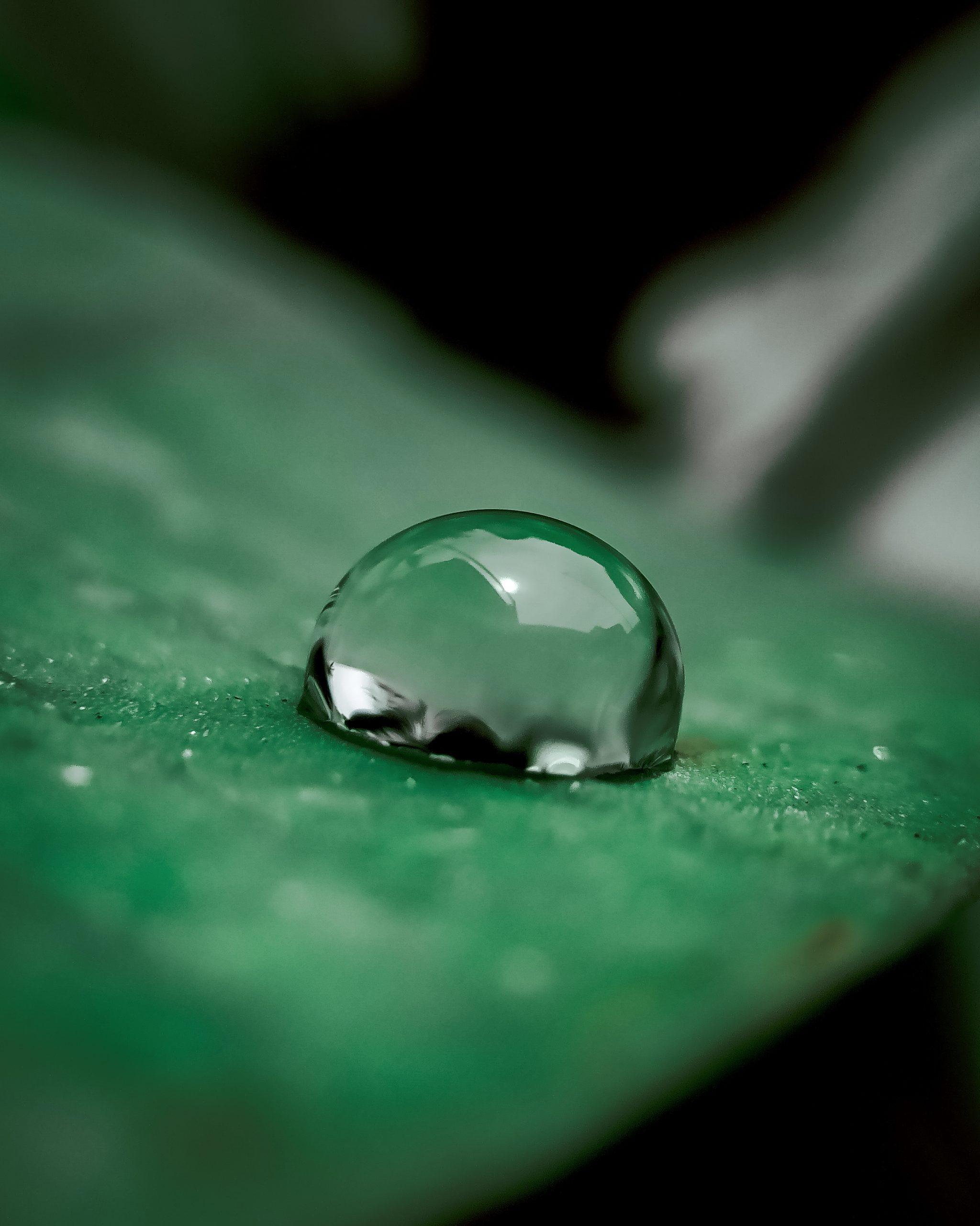 Water droplet in Leaf on Focus