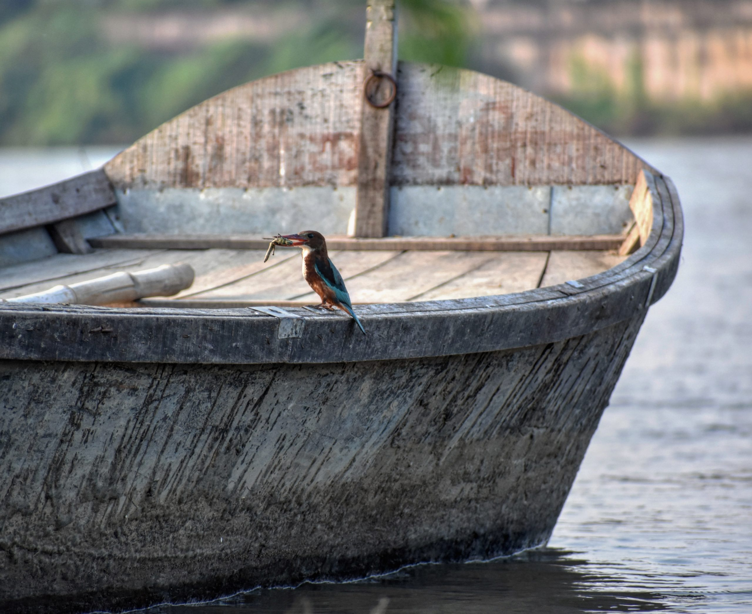 Waterbird catching its Prey on a Boat