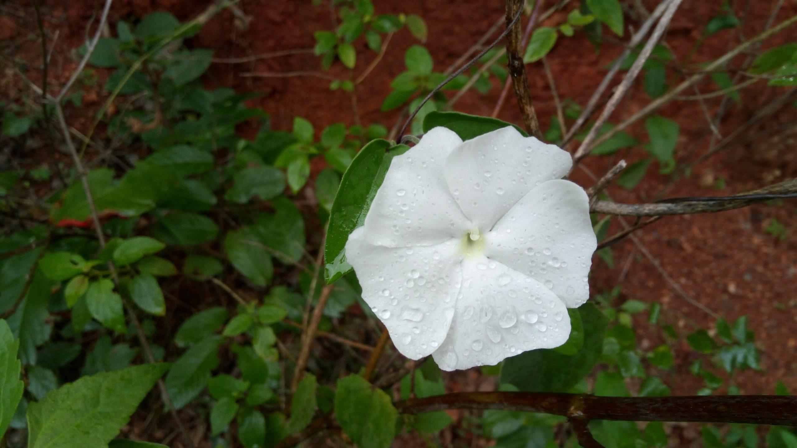 White flower on Focus