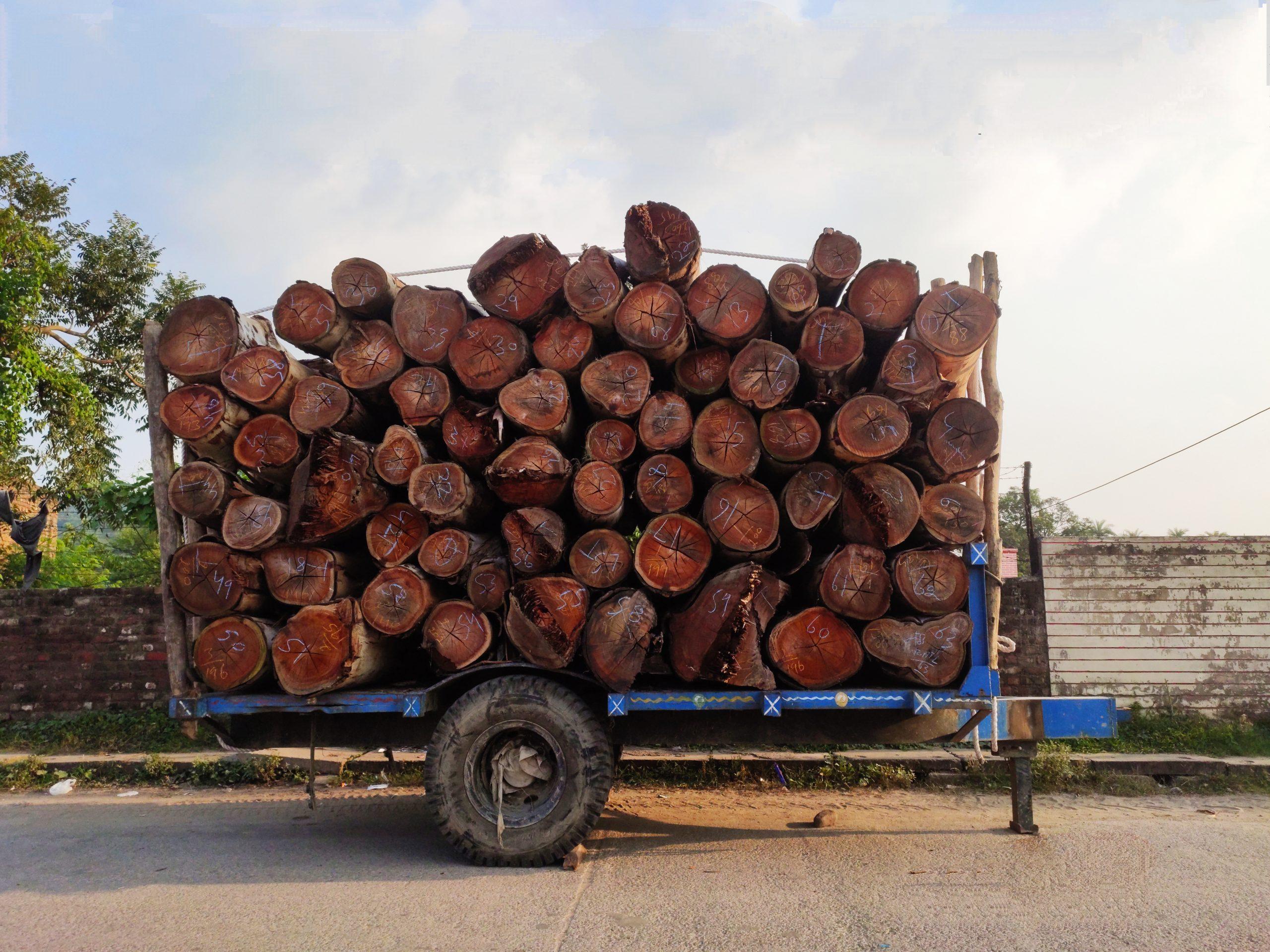 Wood logs in a trolley