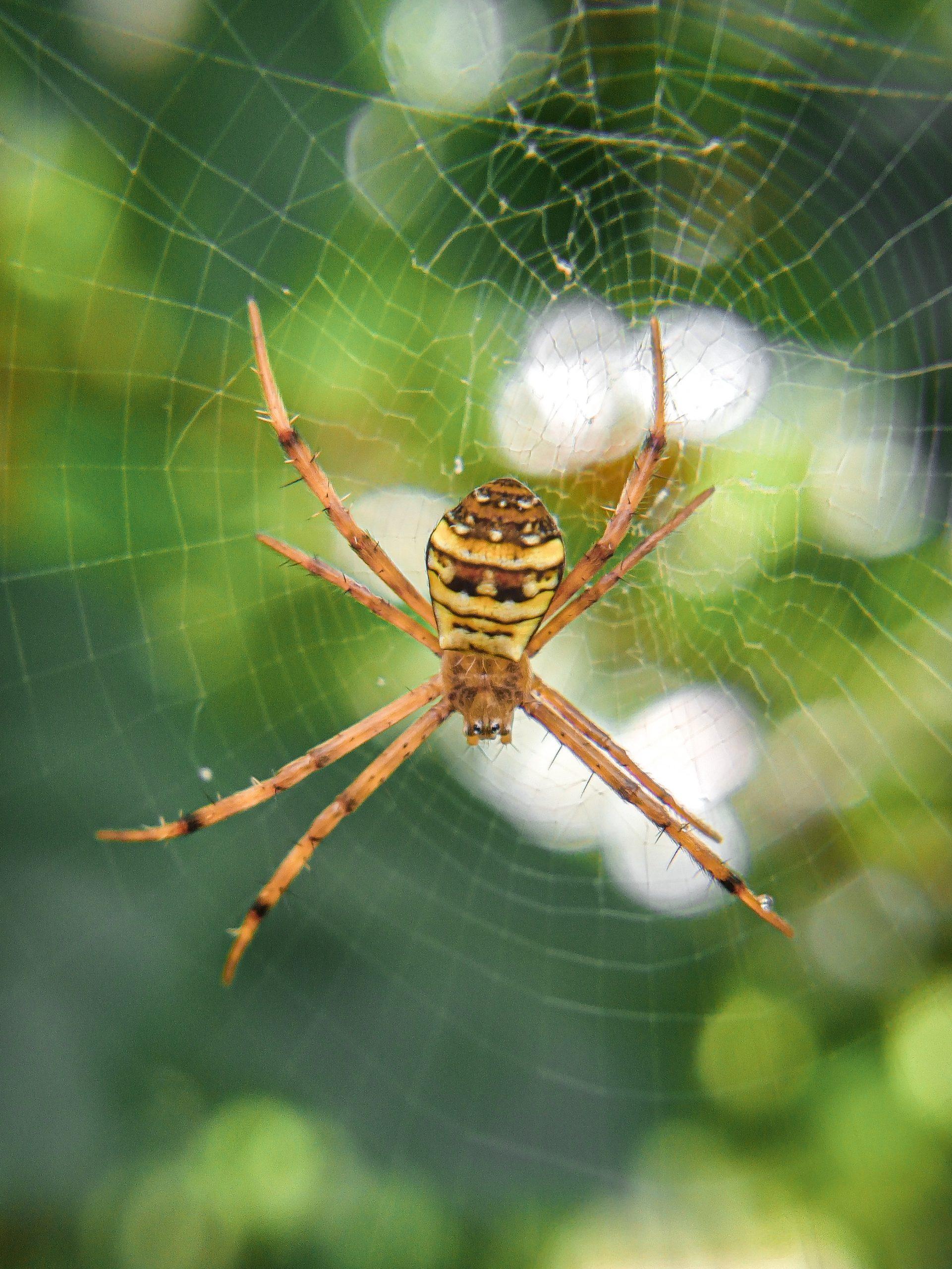 Working Spider