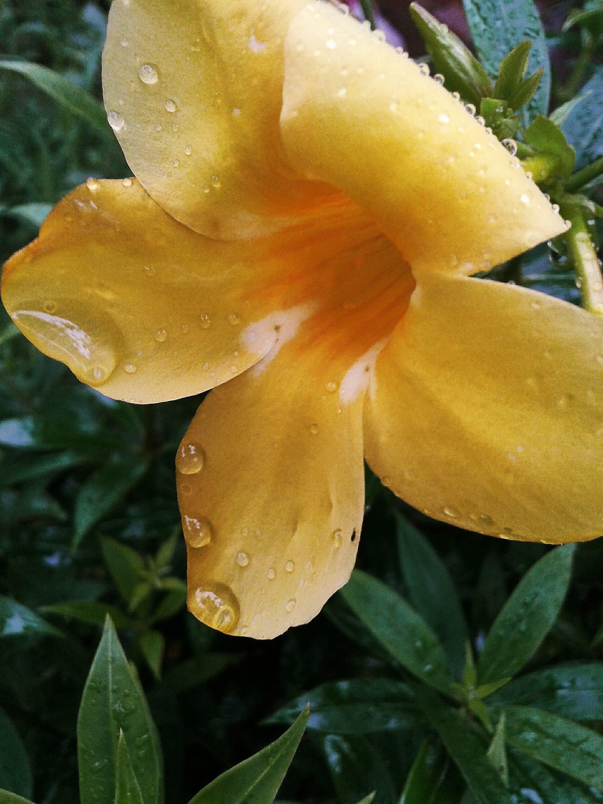Yellow Flower on Focus
