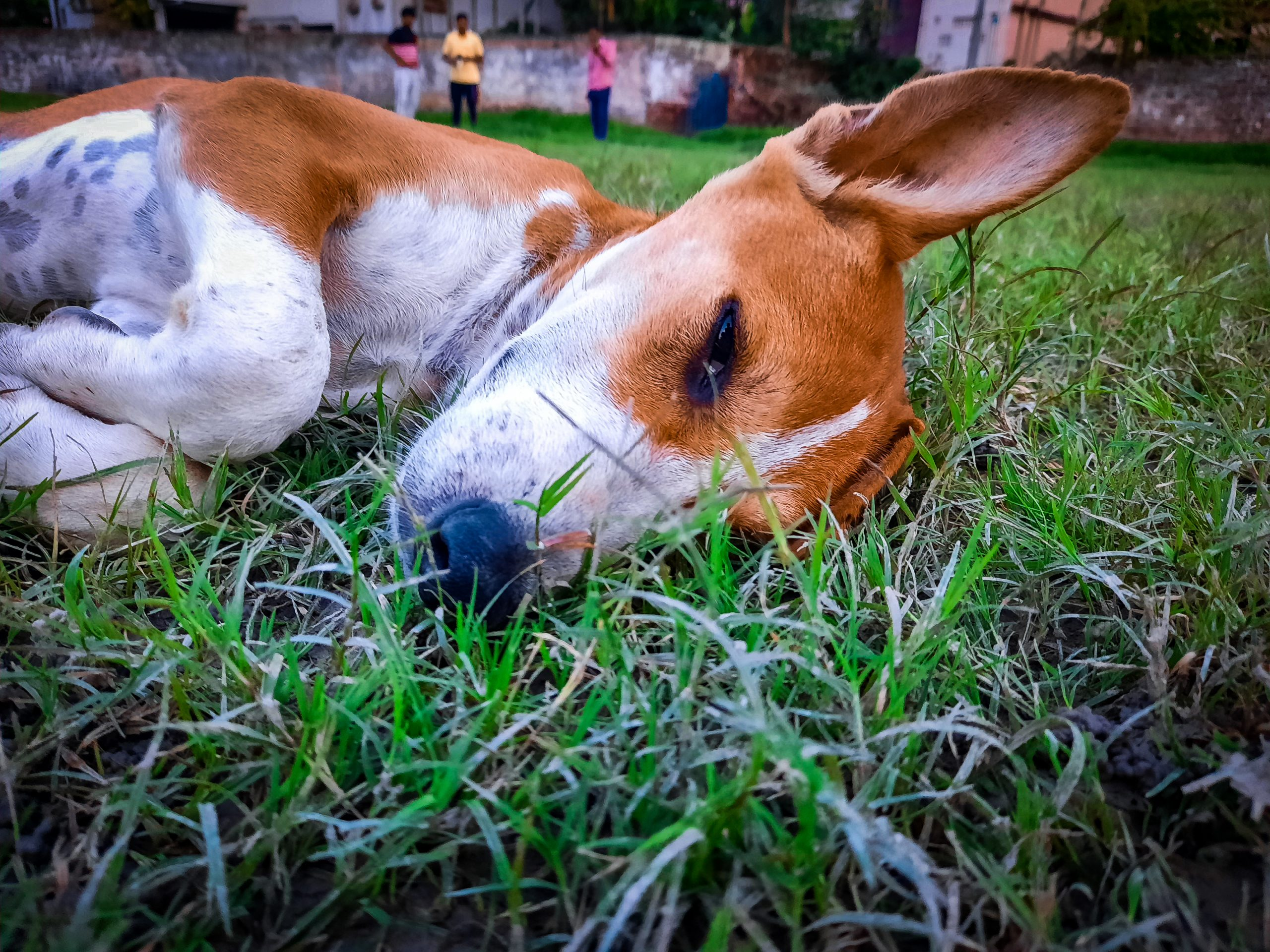 A beautiful baby dog