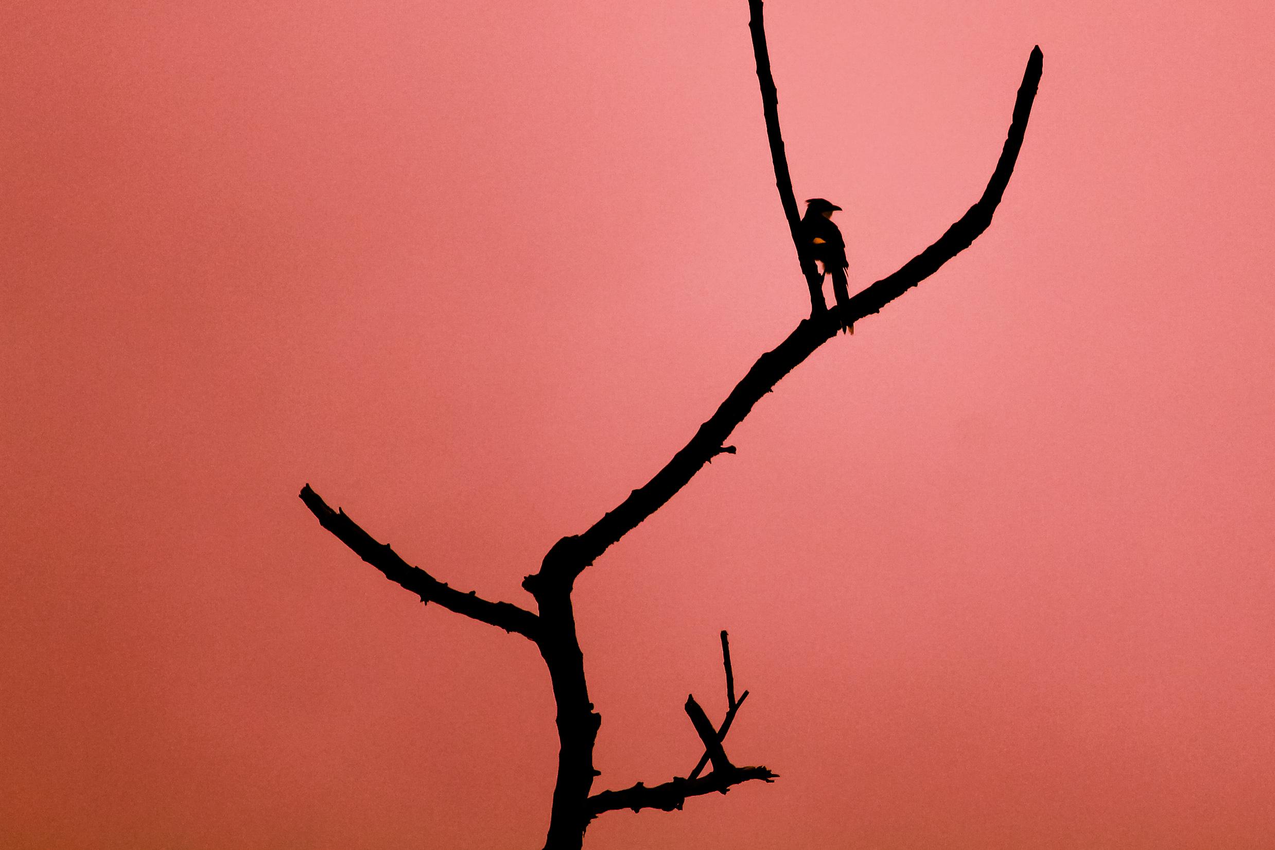 a bird on a dry plant