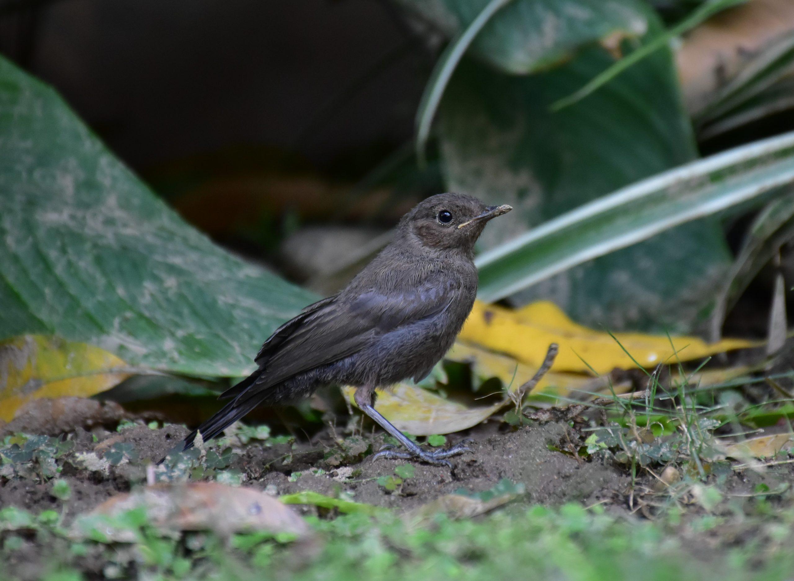bird resting on ground