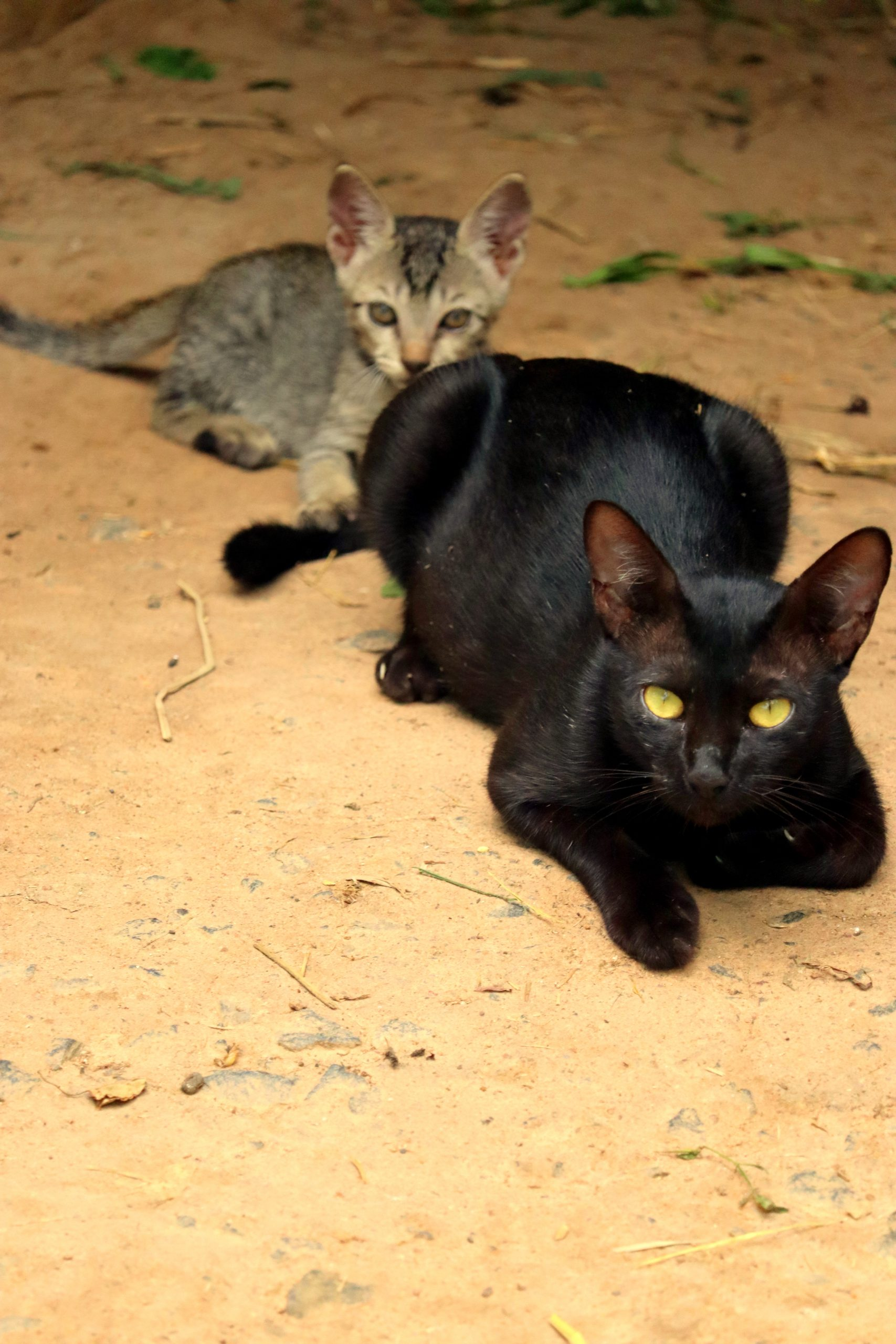 Cats lying on the ground