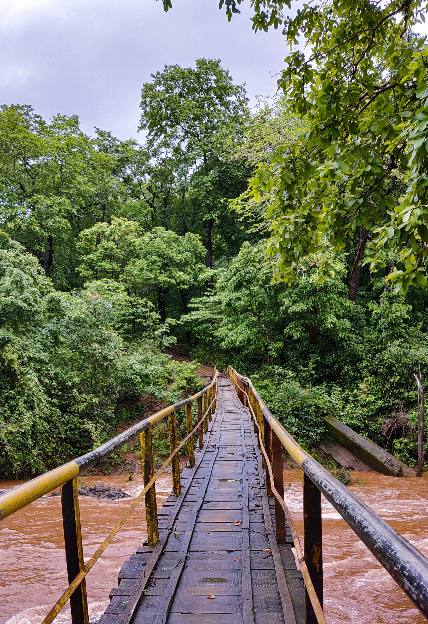 canopy walkway to the Forest