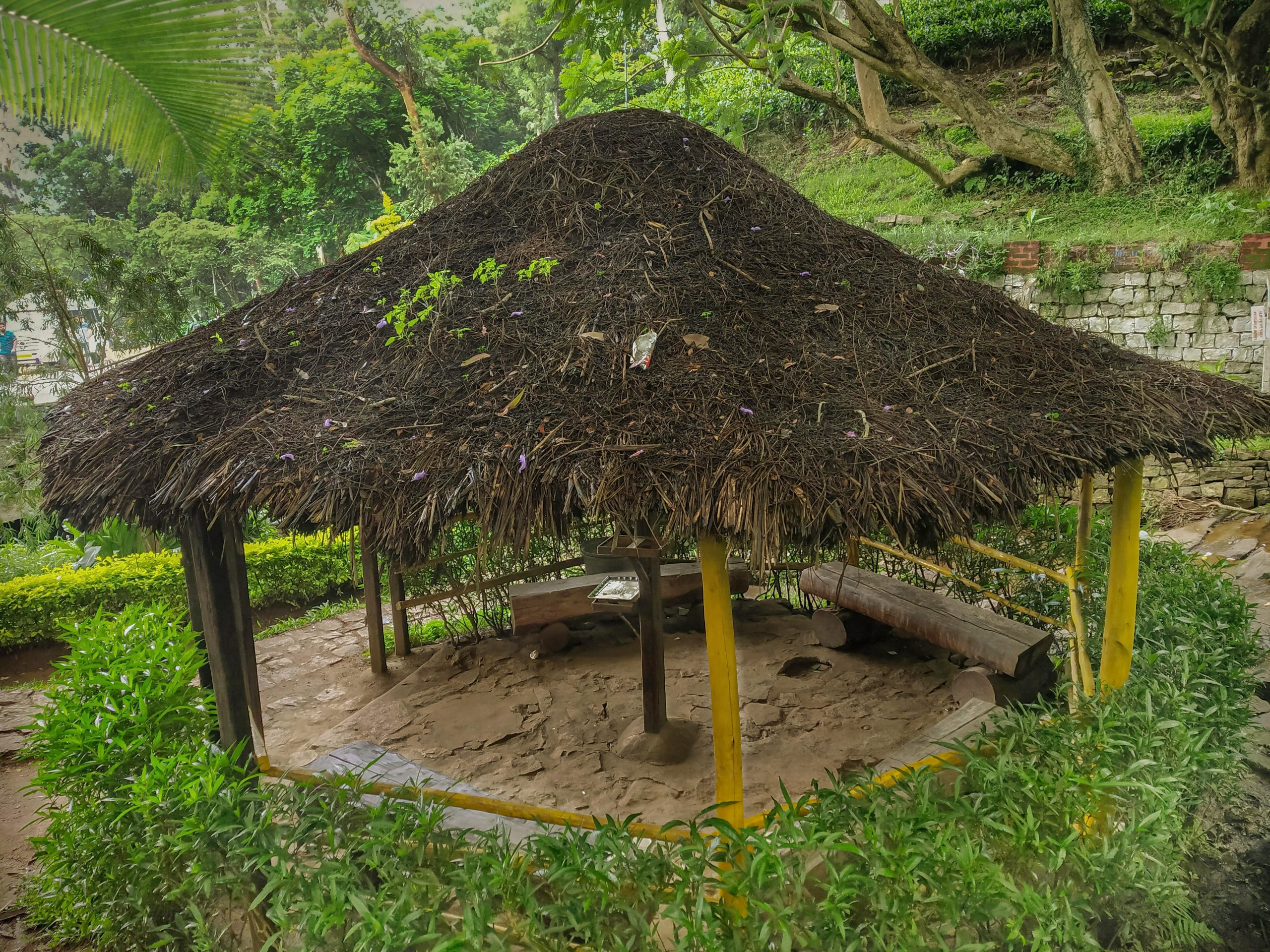 A Thatching Hut in The Forest