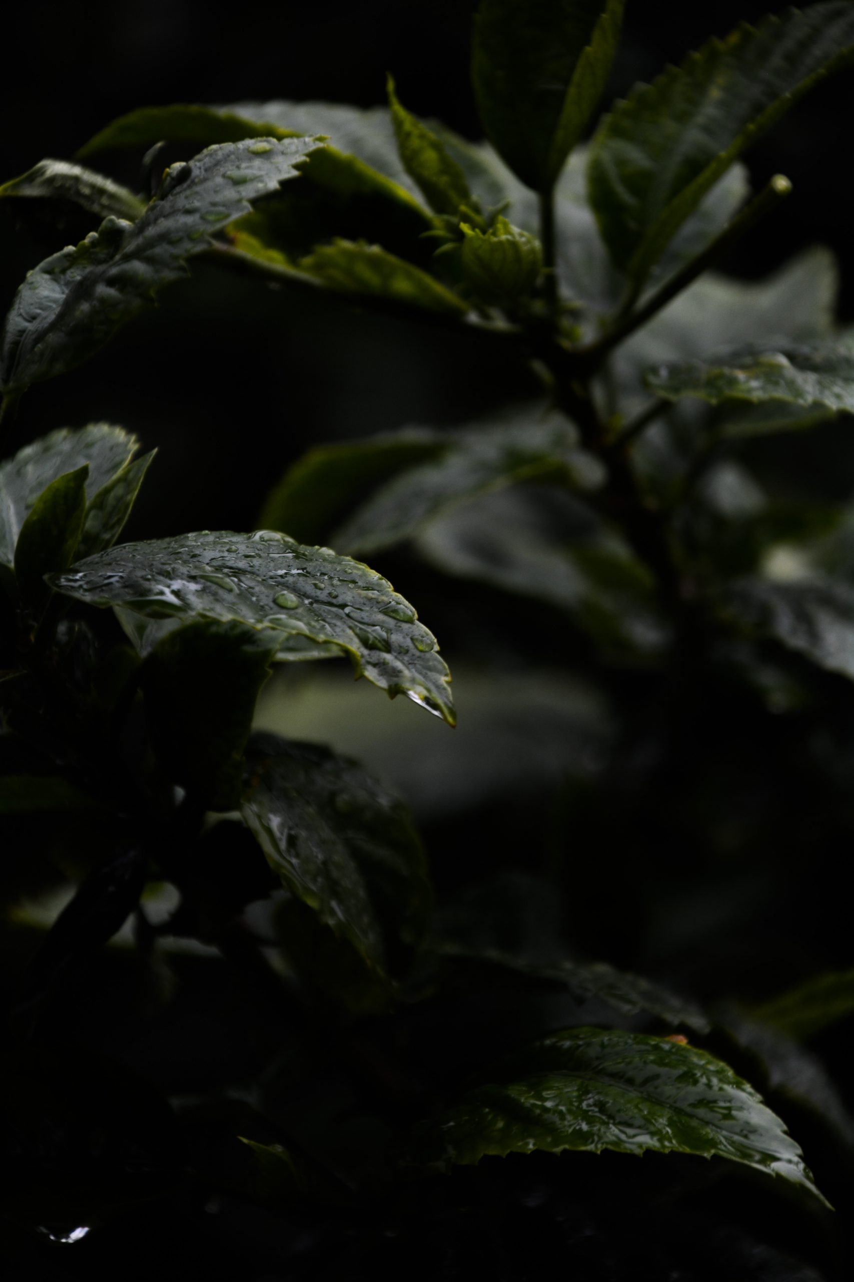 Wet Plant Leaves on Focus
