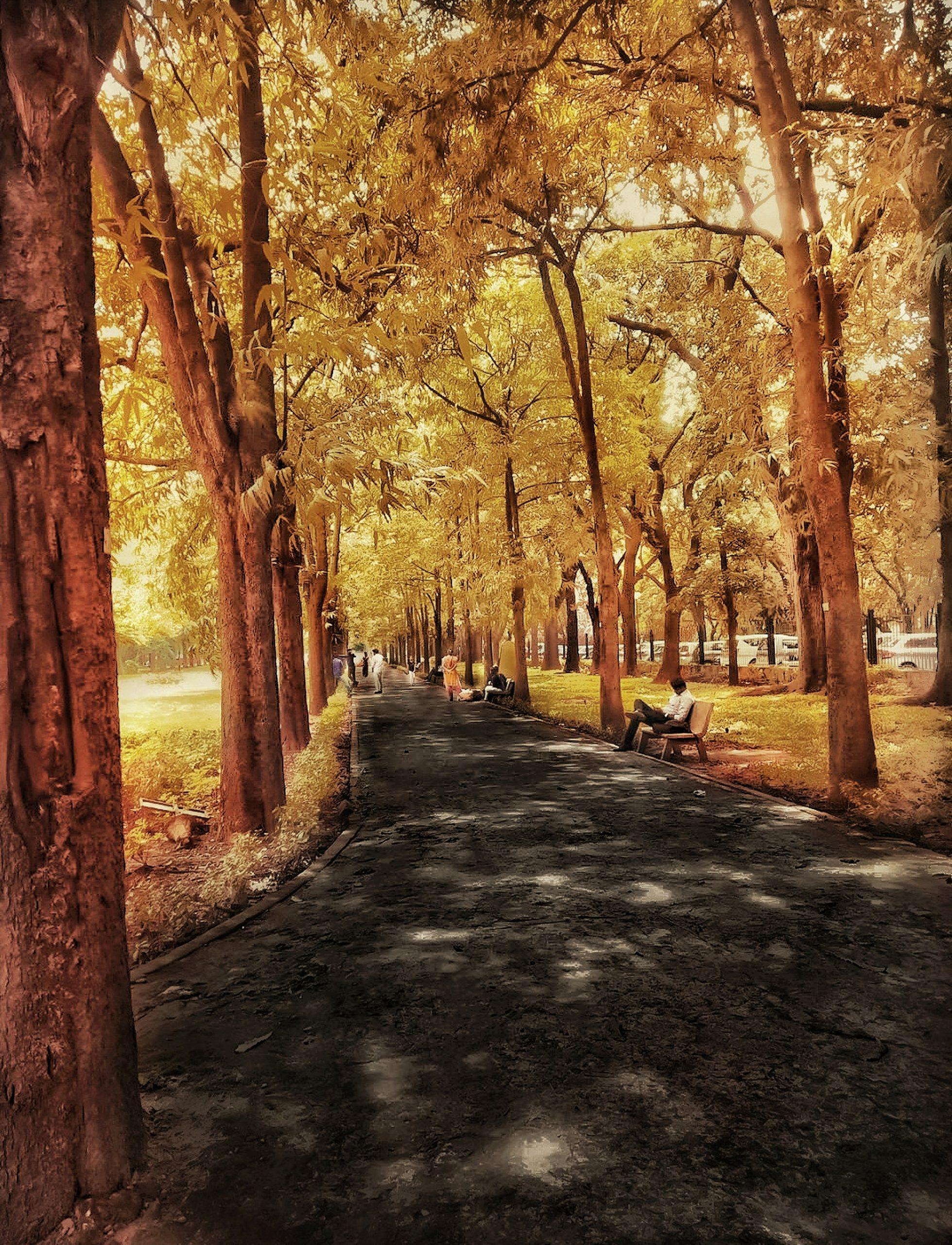 jogging track at a park