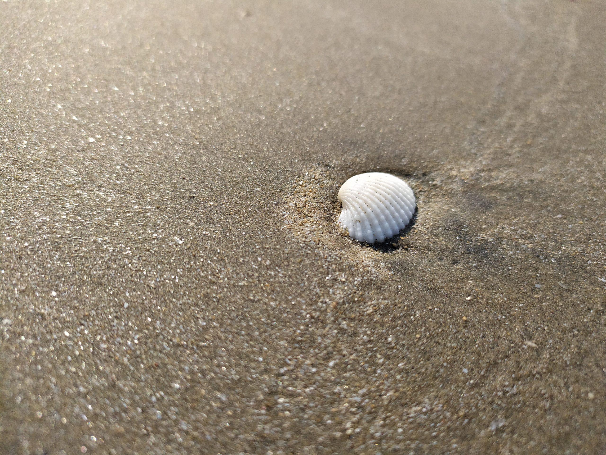 Single shell on the sand