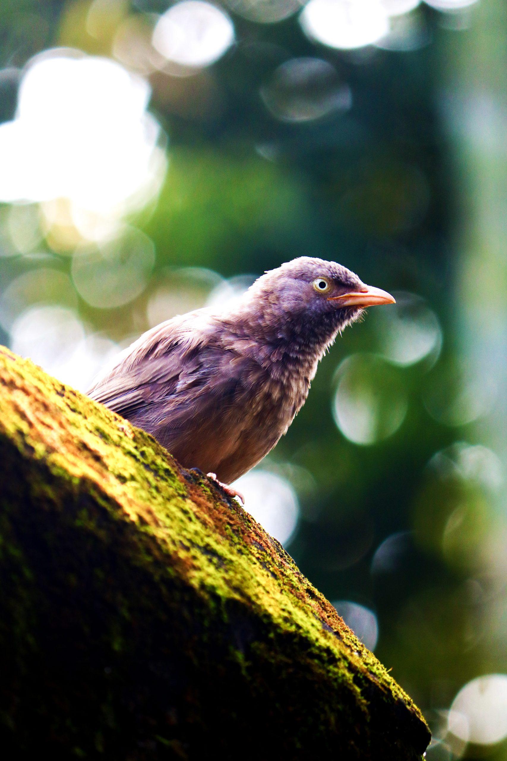 A sparrow sitting on a wall