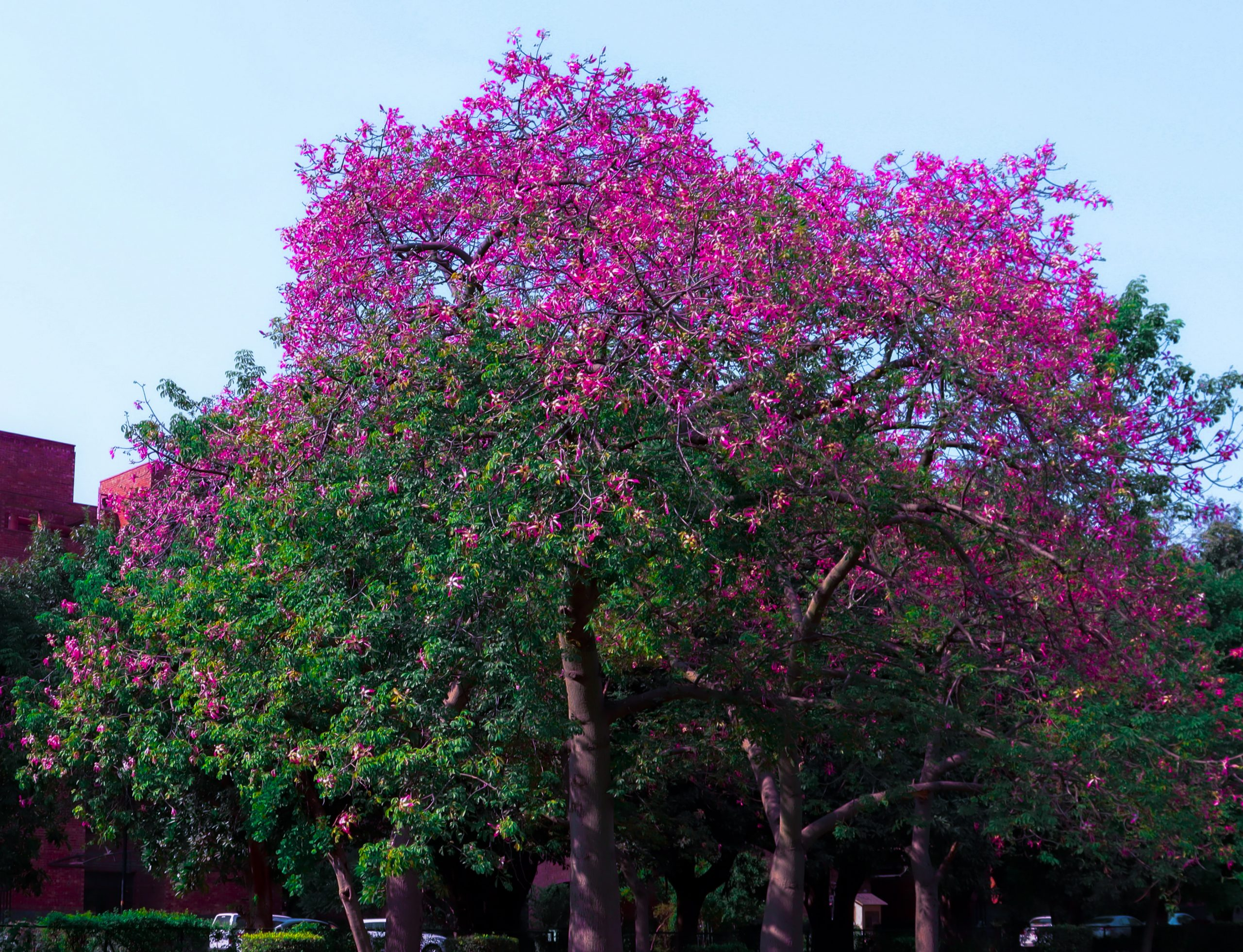 tree with flower