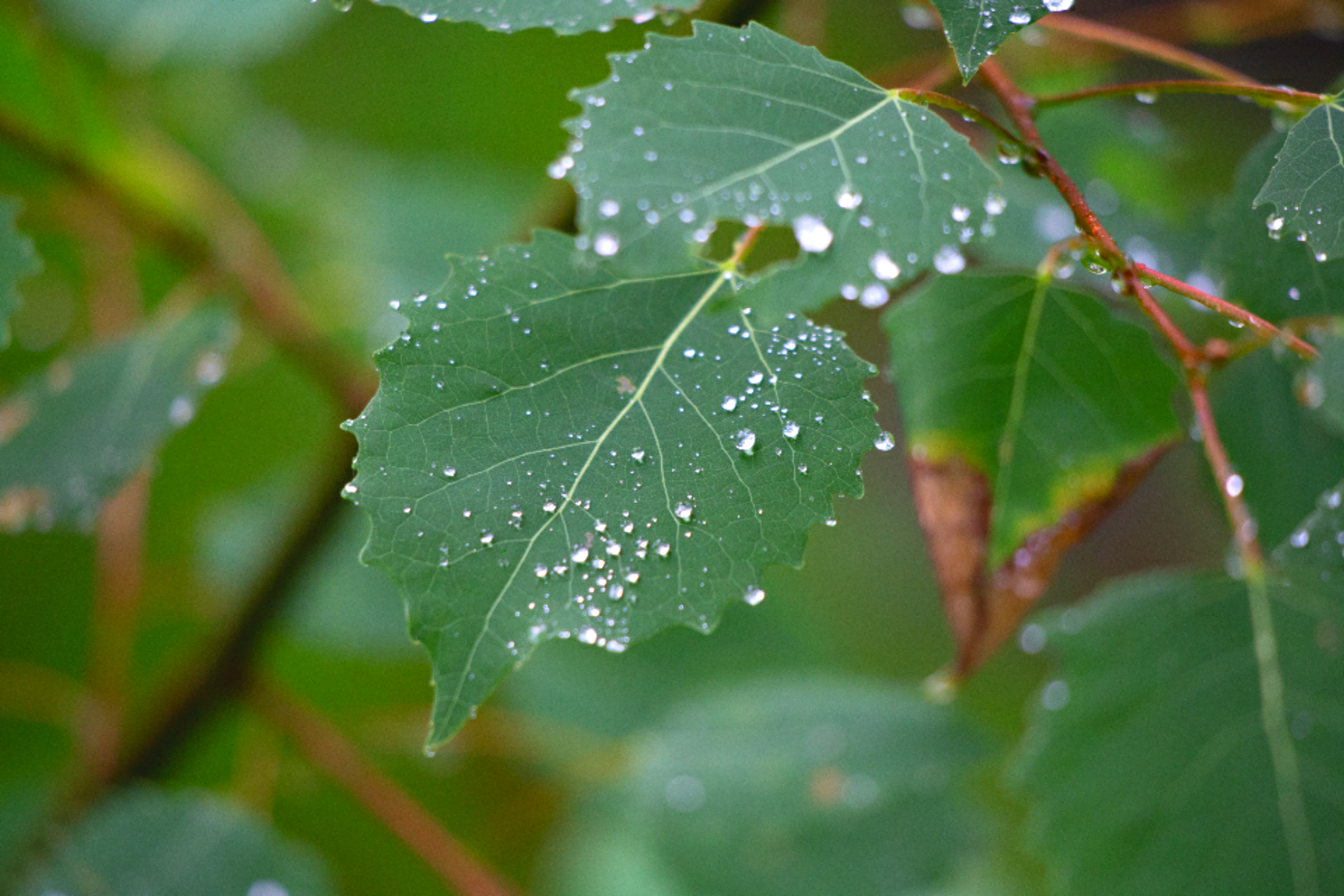 Moisture on plant leaves