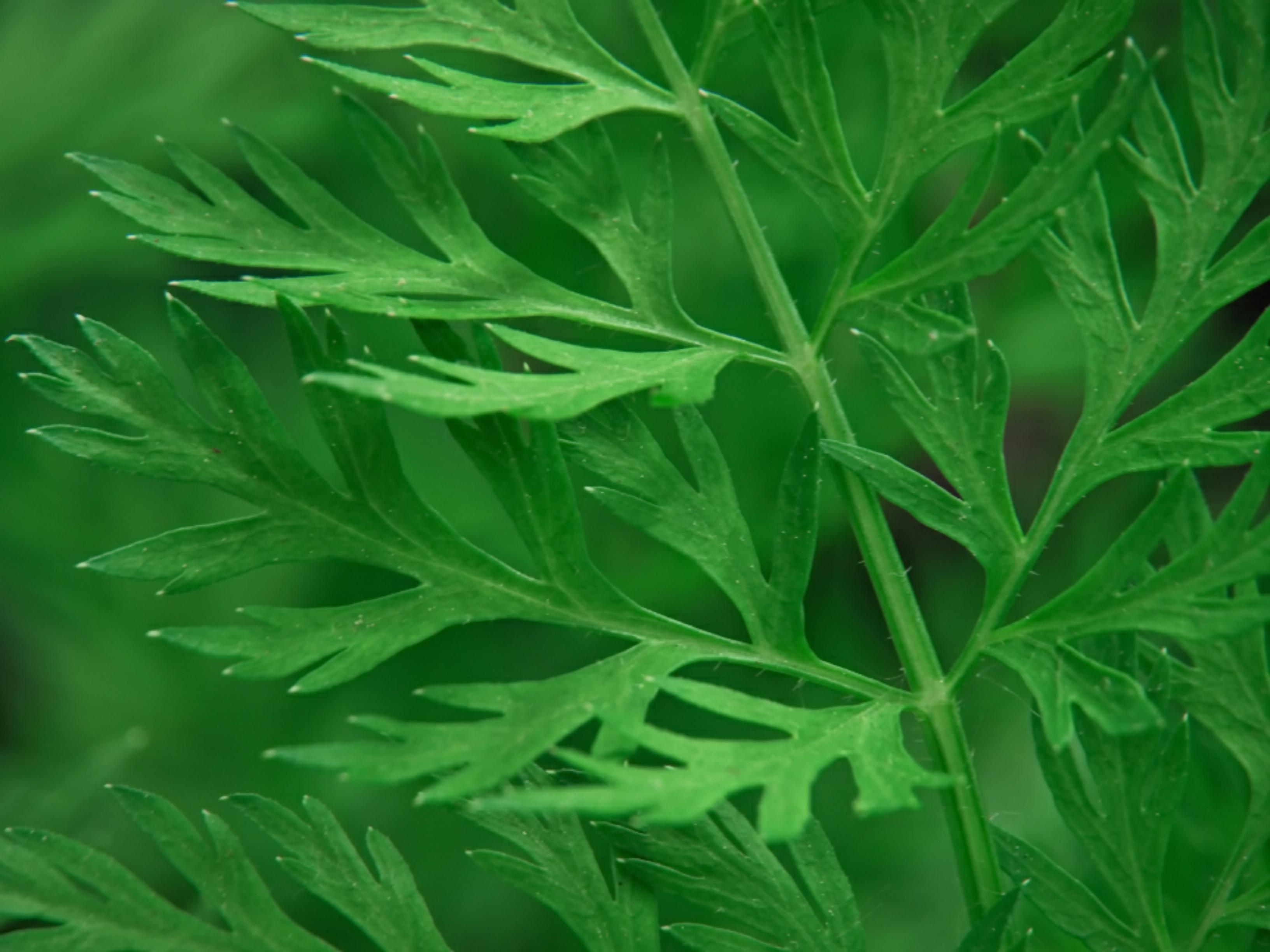 Unique texture of plant leaves
