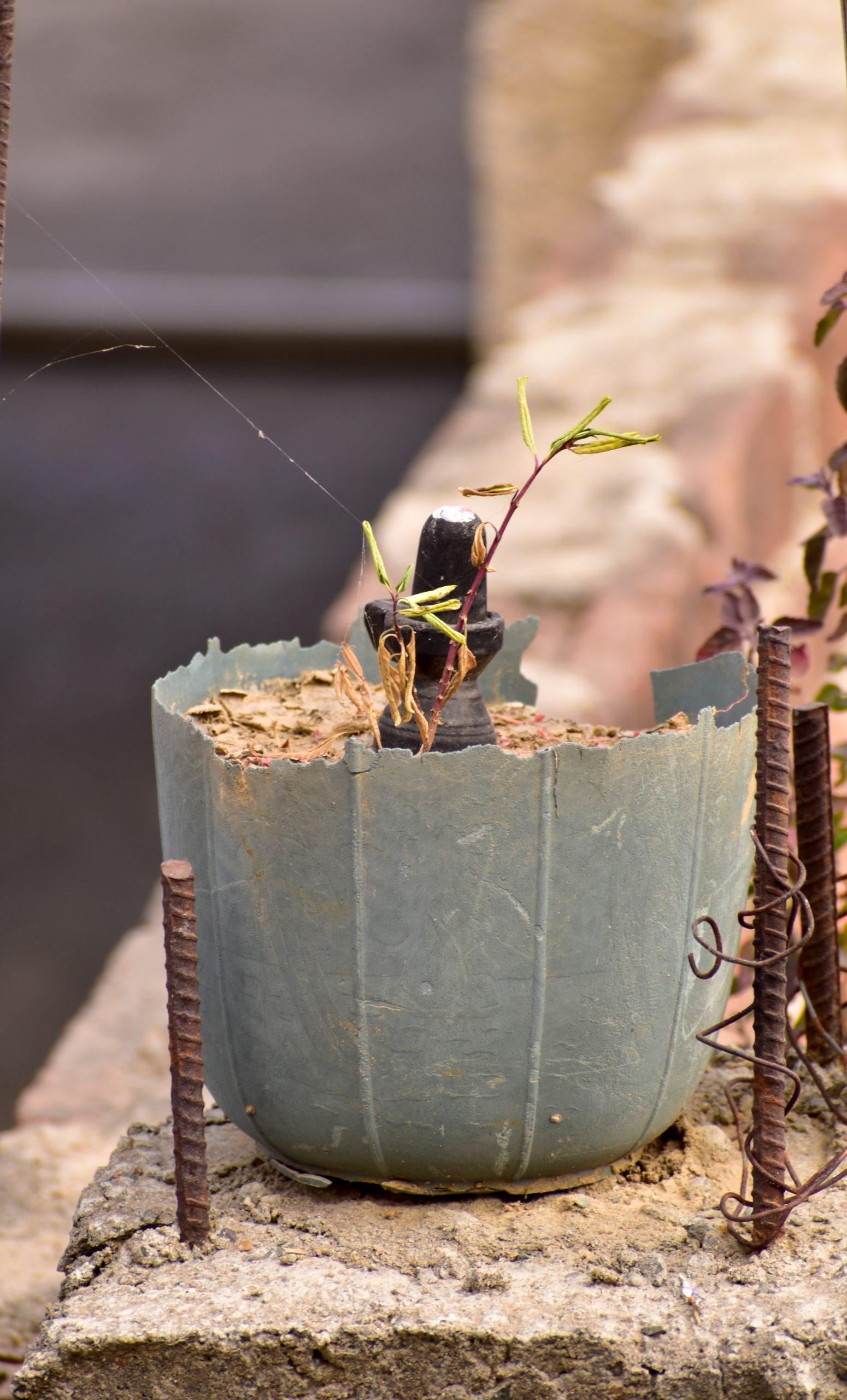 A Lingam in a pot