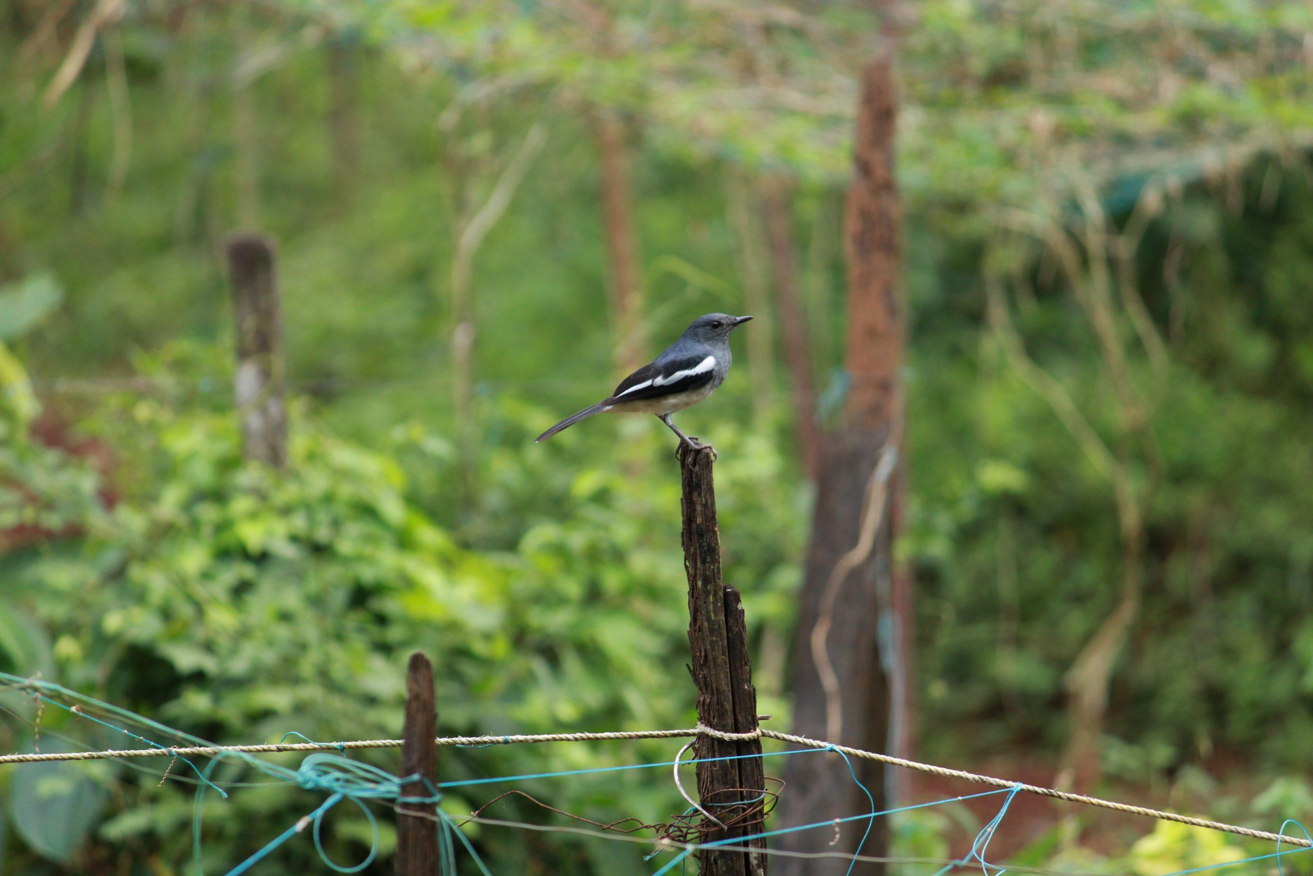 Bird sitting on wood