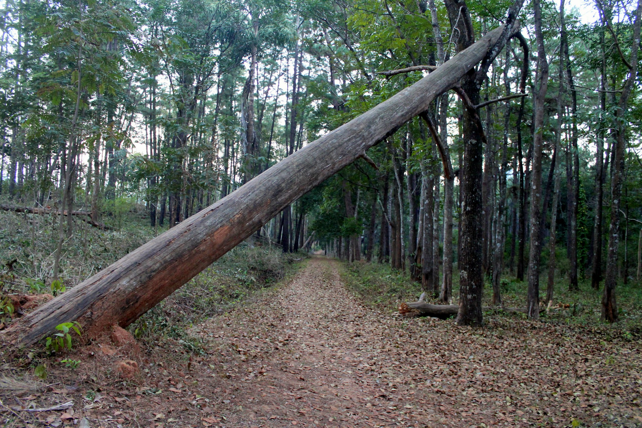 A broken tree in a jungle