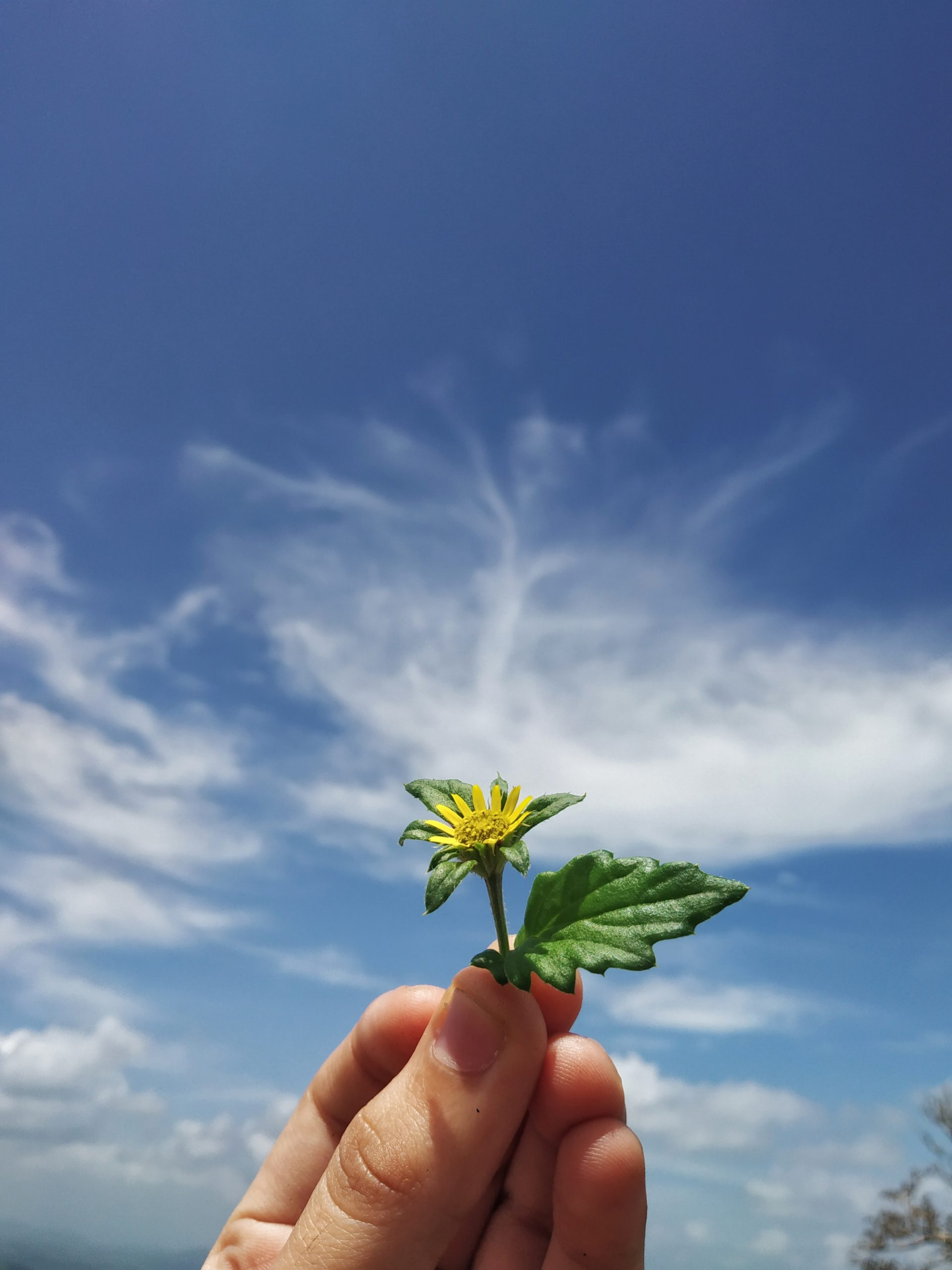 A cut flower in hand