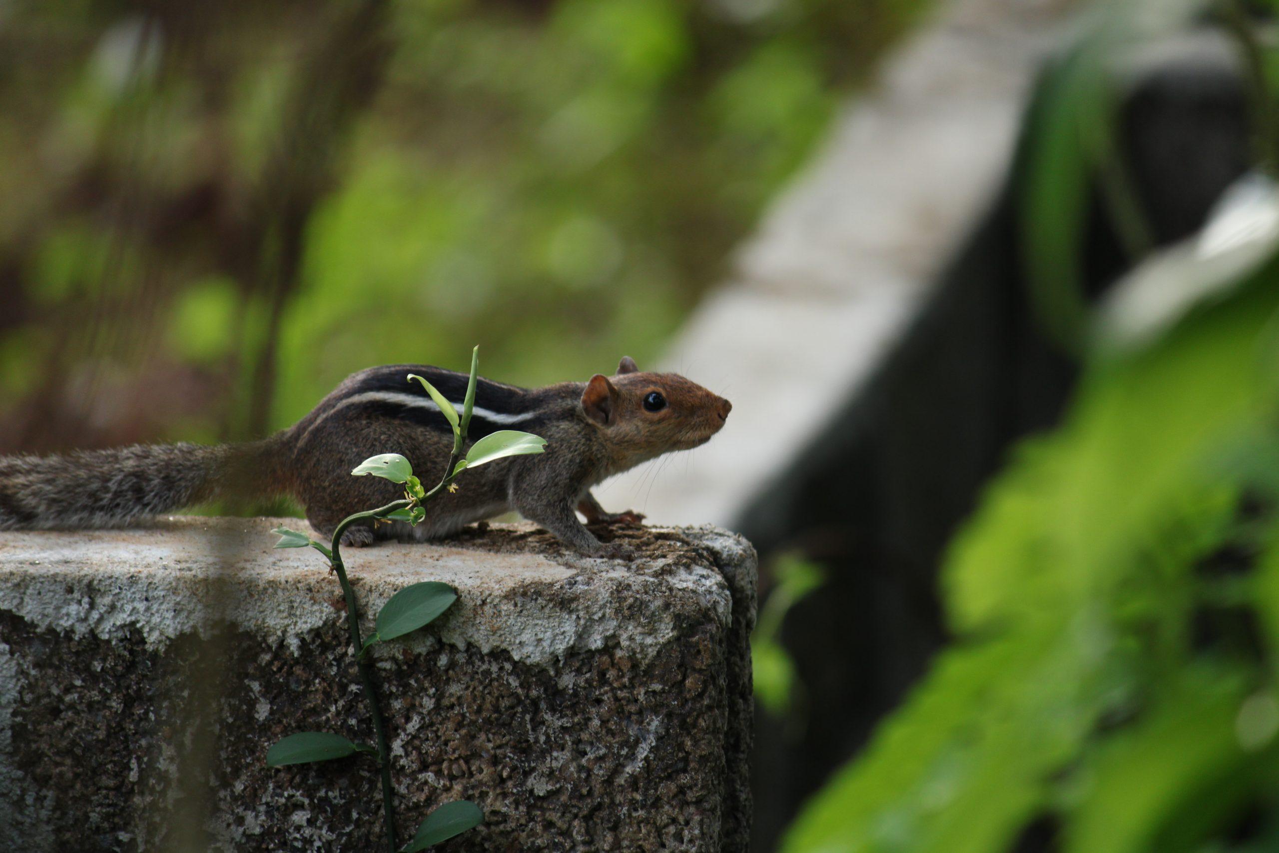 squirrel on a ledge