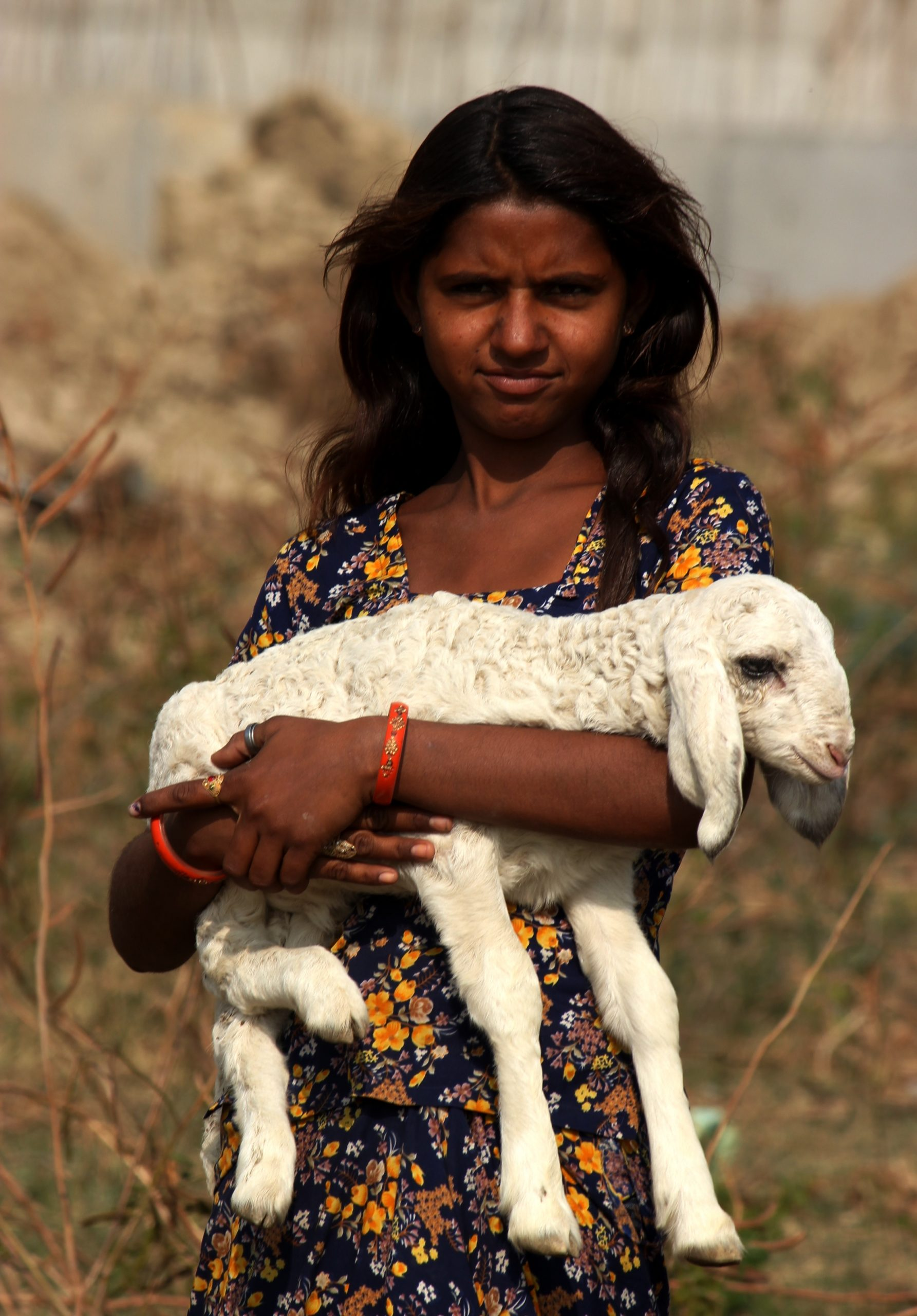 A girl holding baby goat