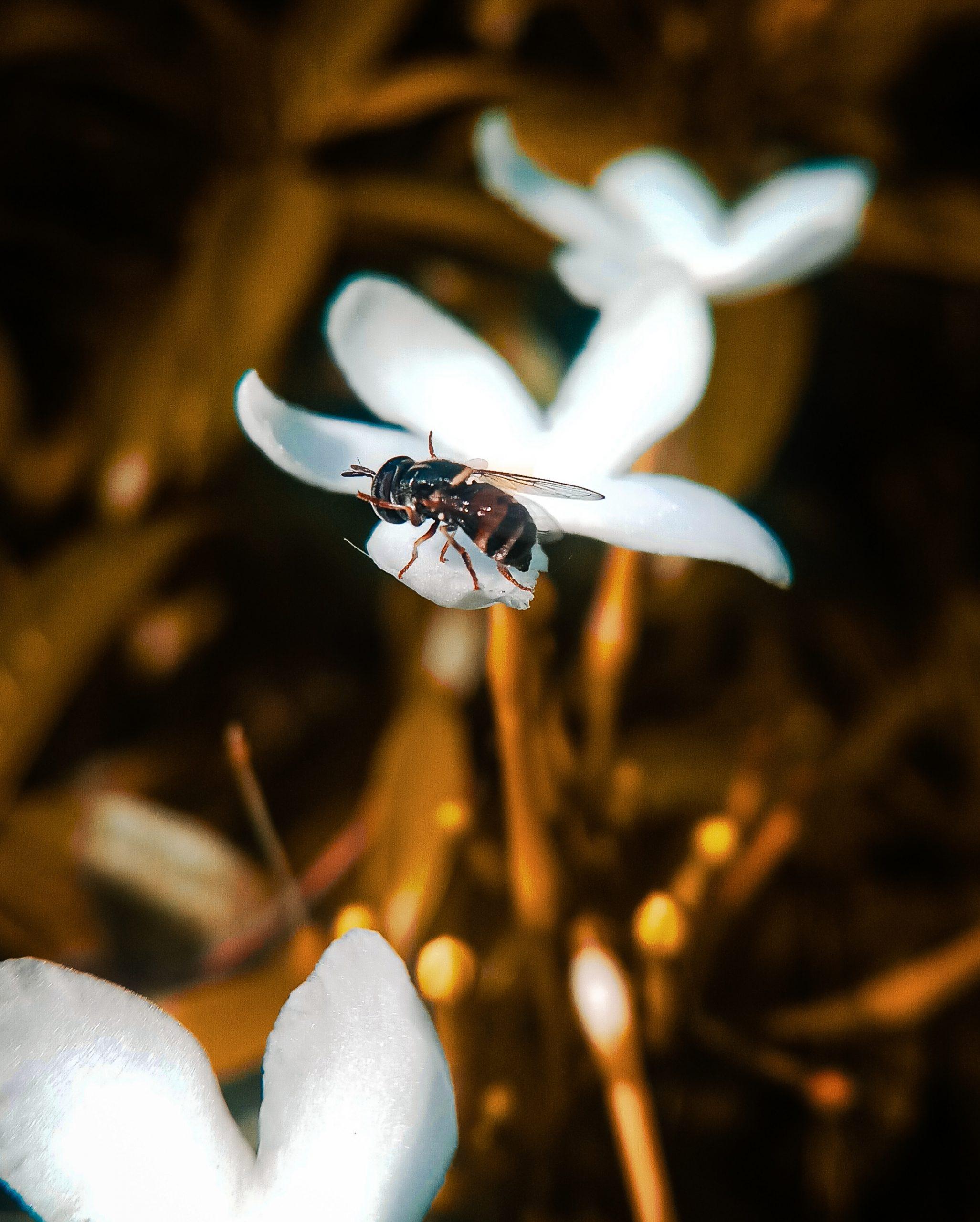 A honeybee on a flower