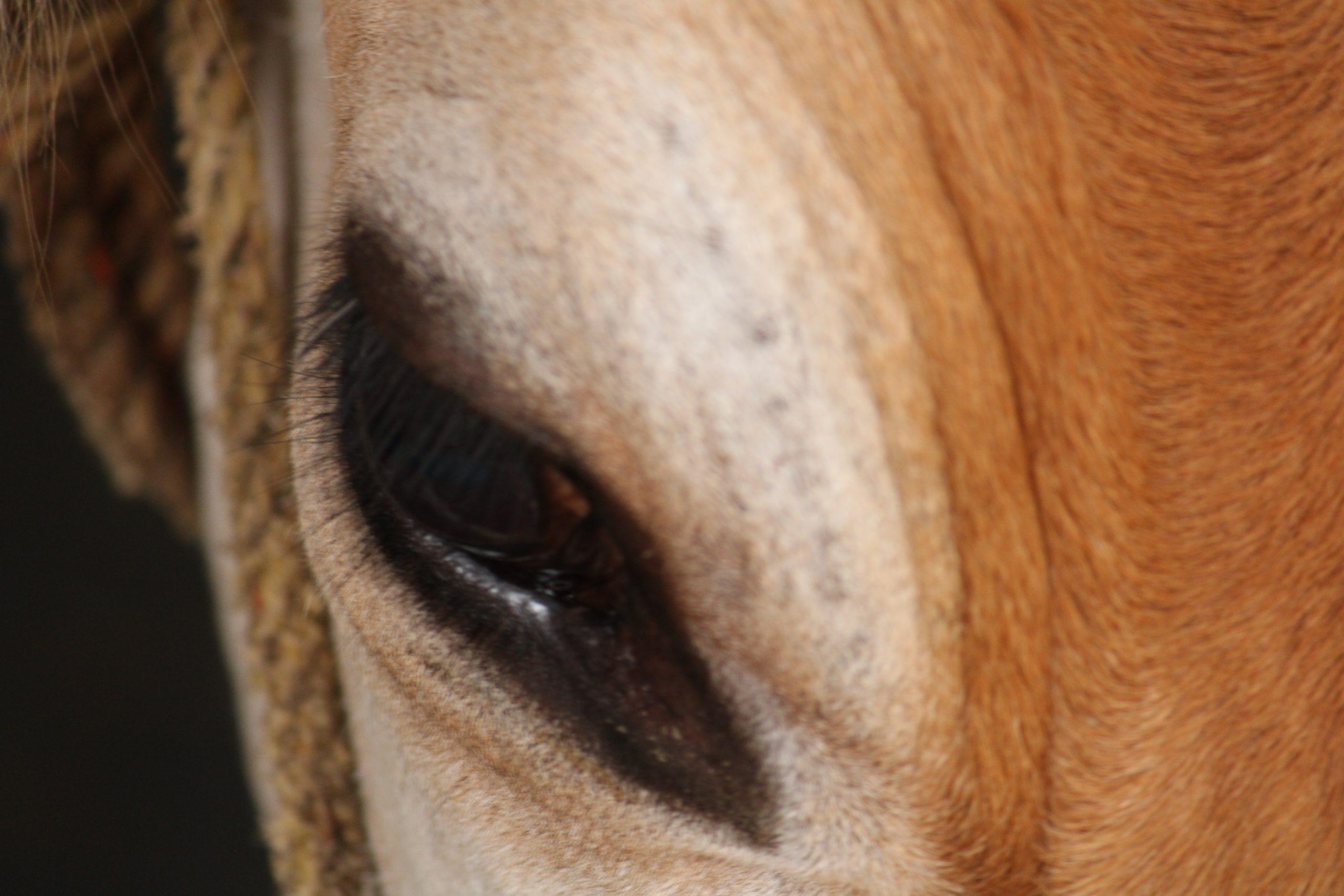 A horse in a farm