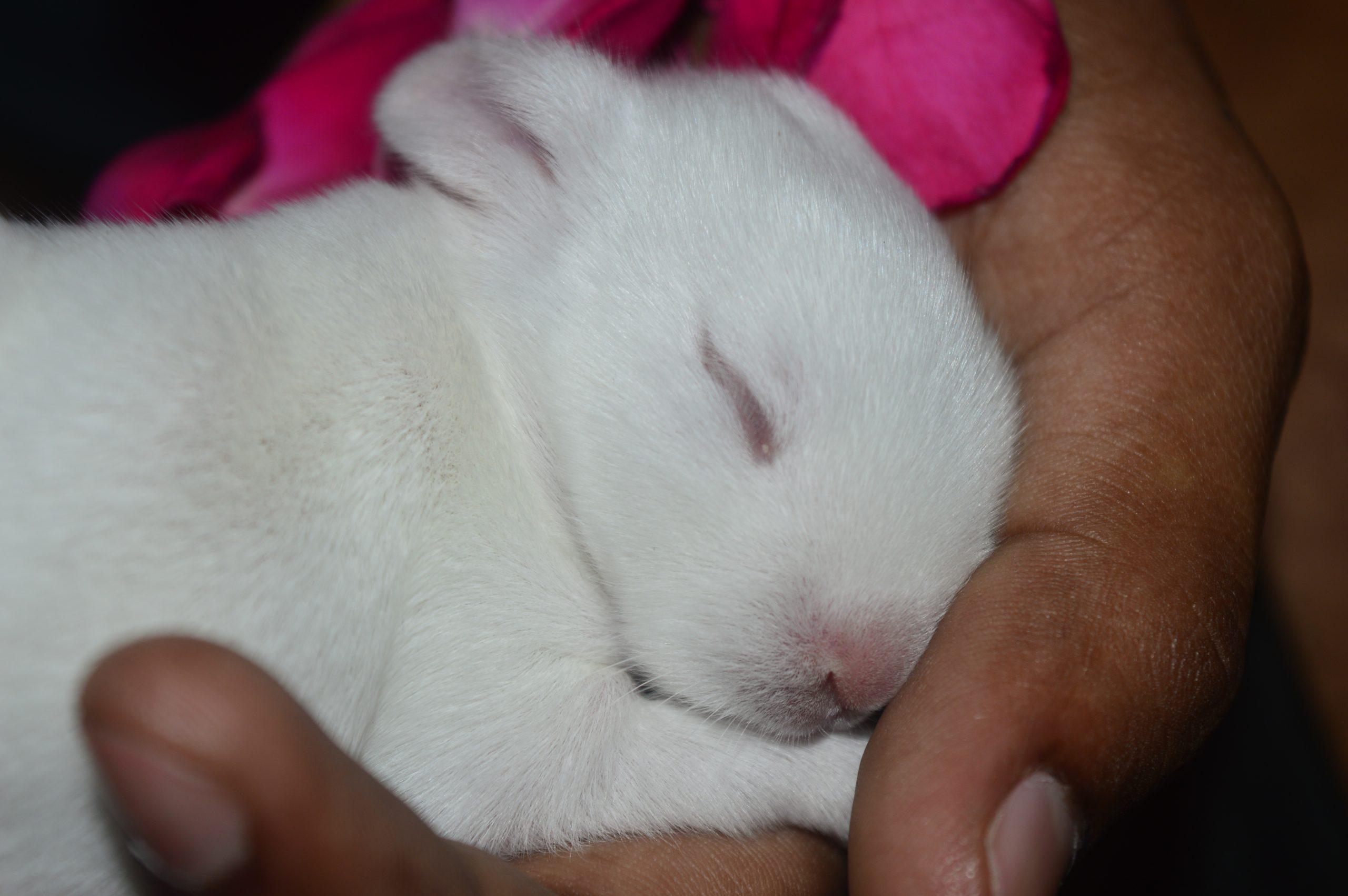 A kitten resting in hand