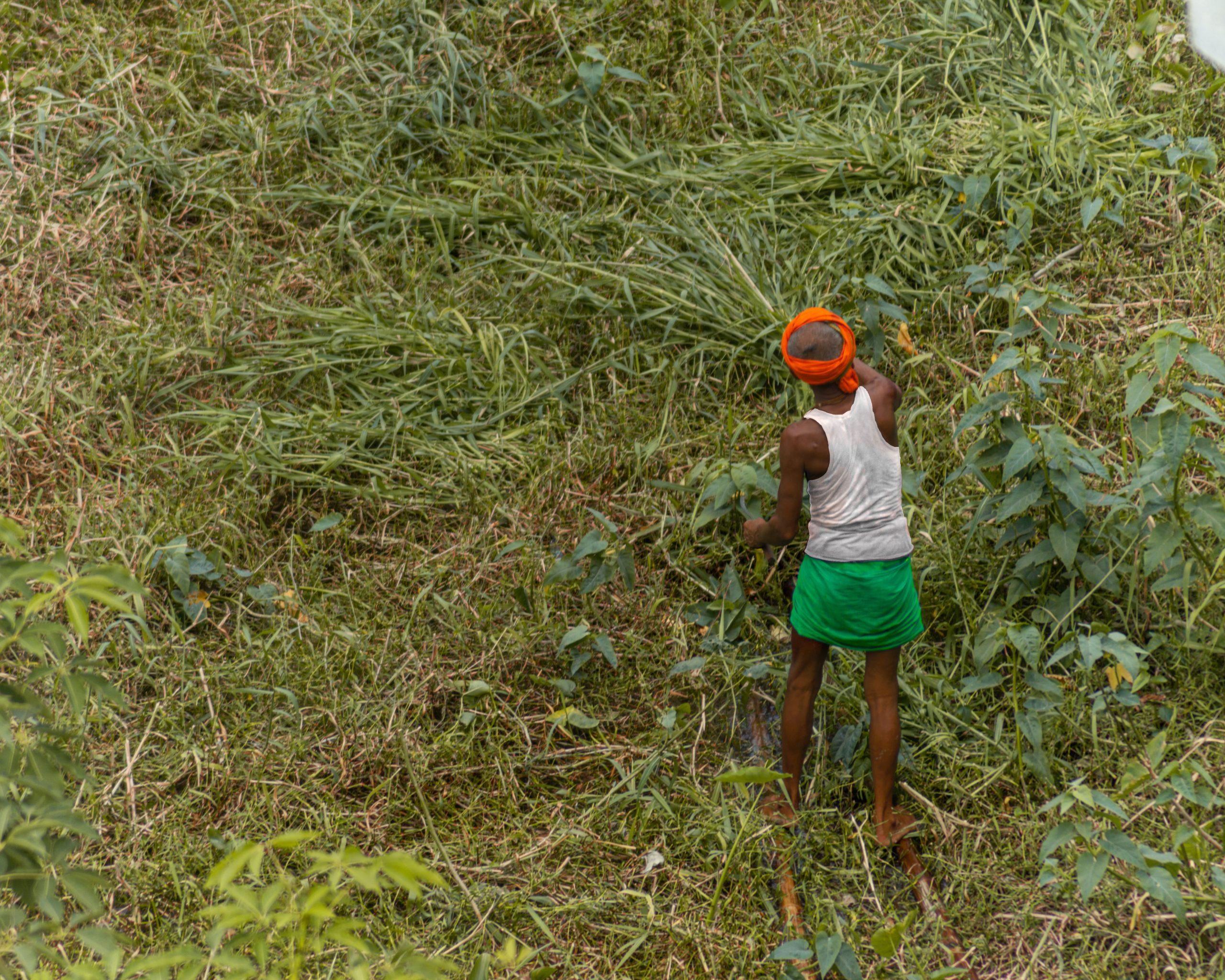 A man cutting grass