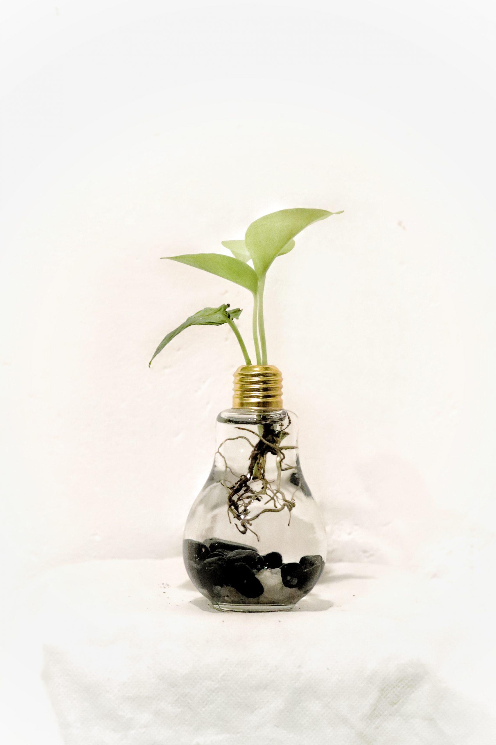 A money plant