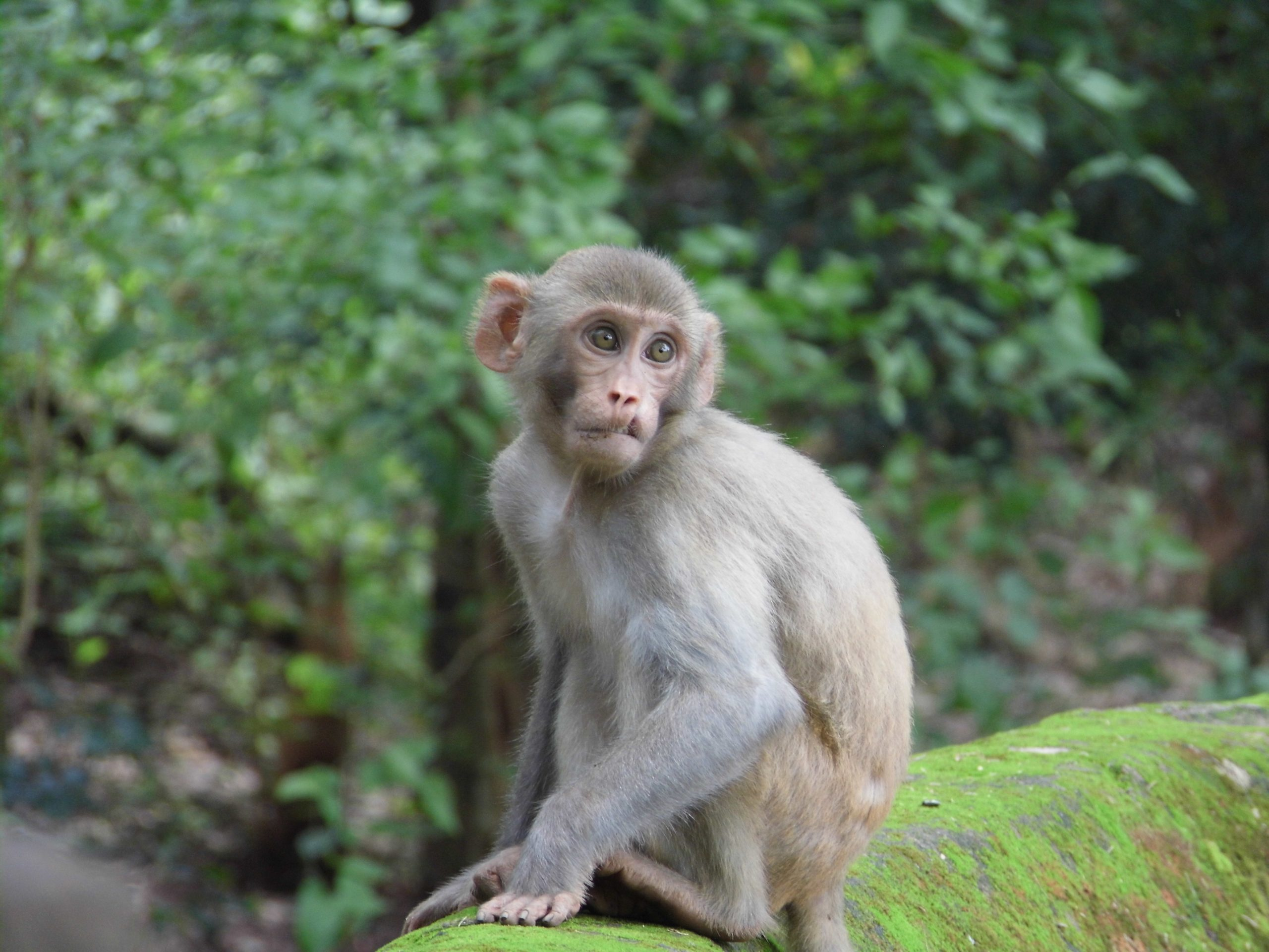 A monkey on a rock