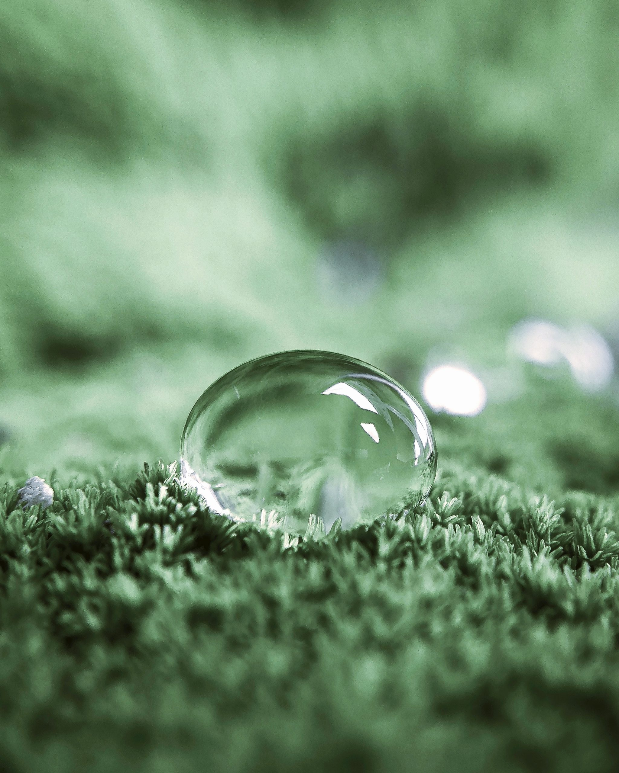waterdrop on grass