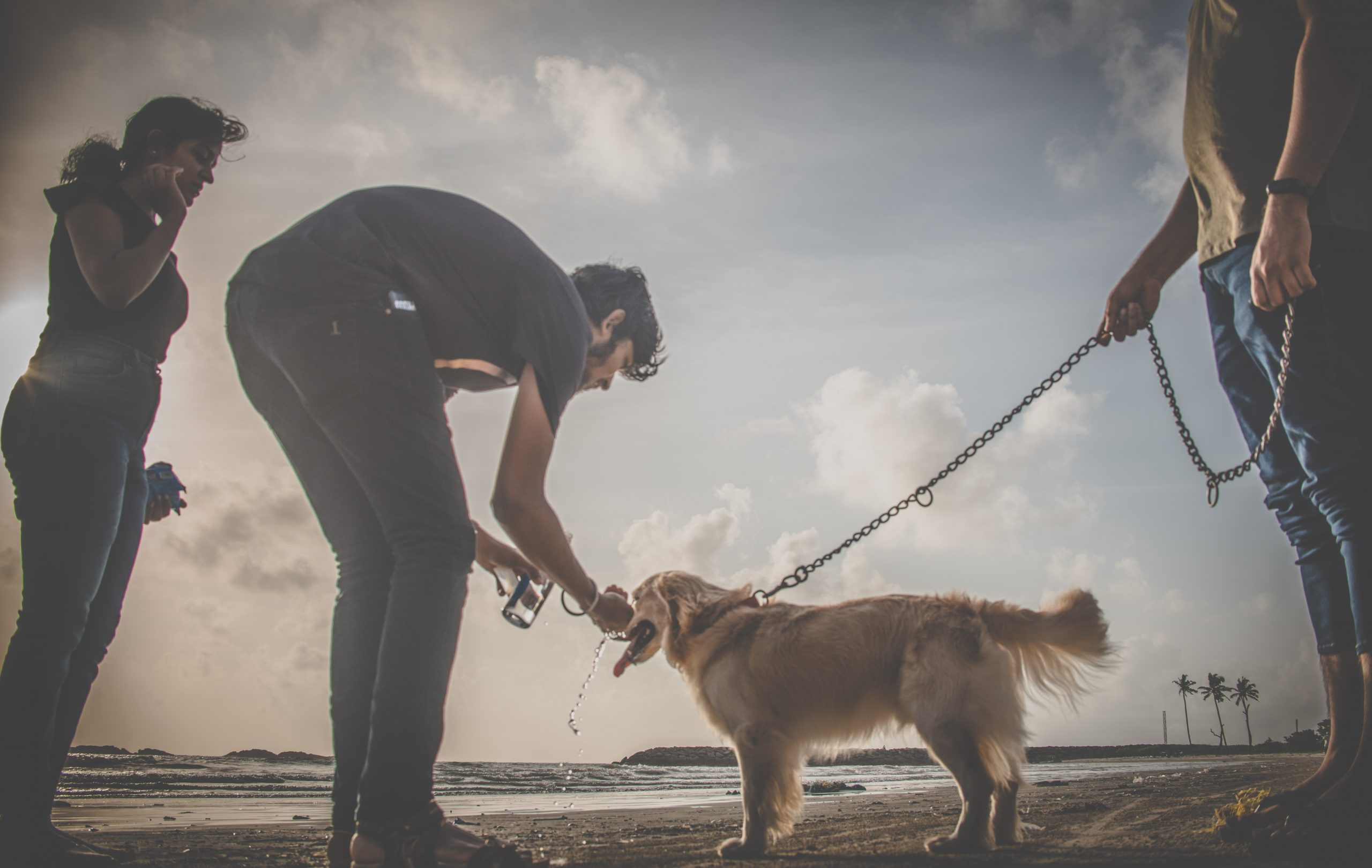 A pet dog and humans