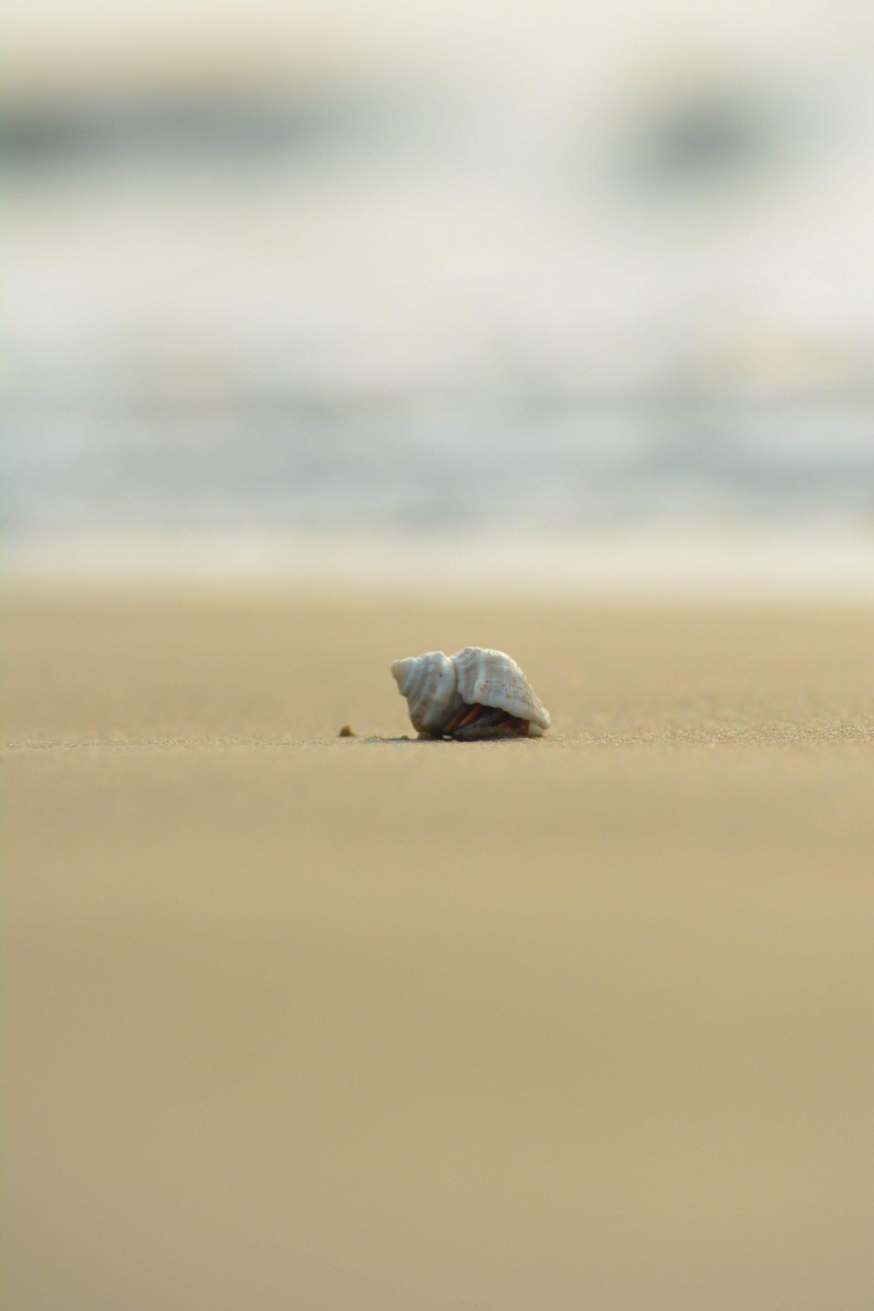 A sea shell on sand