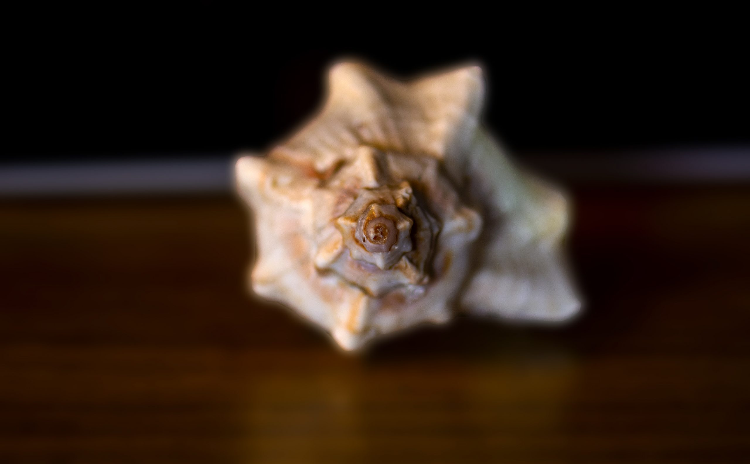 A seashell used for sacred voice