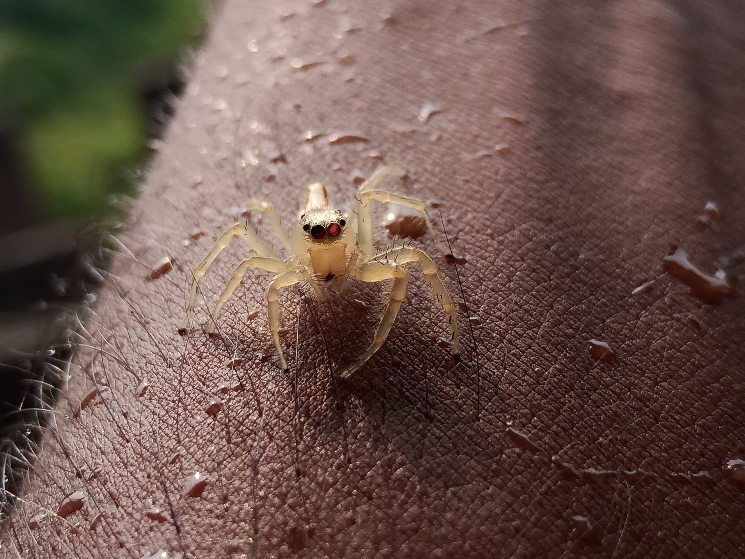 A spider on human skin