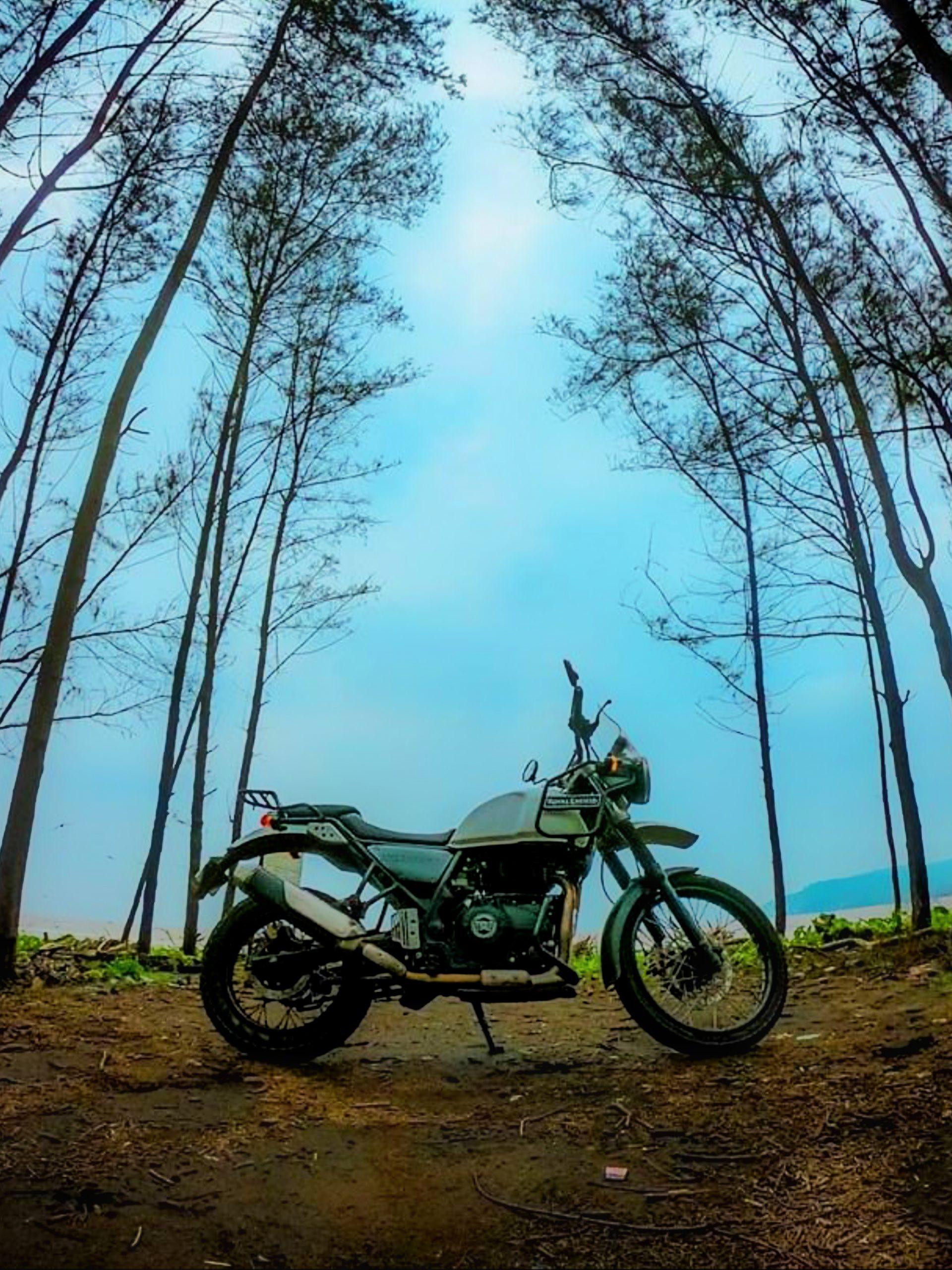 A sports bike in a jungle