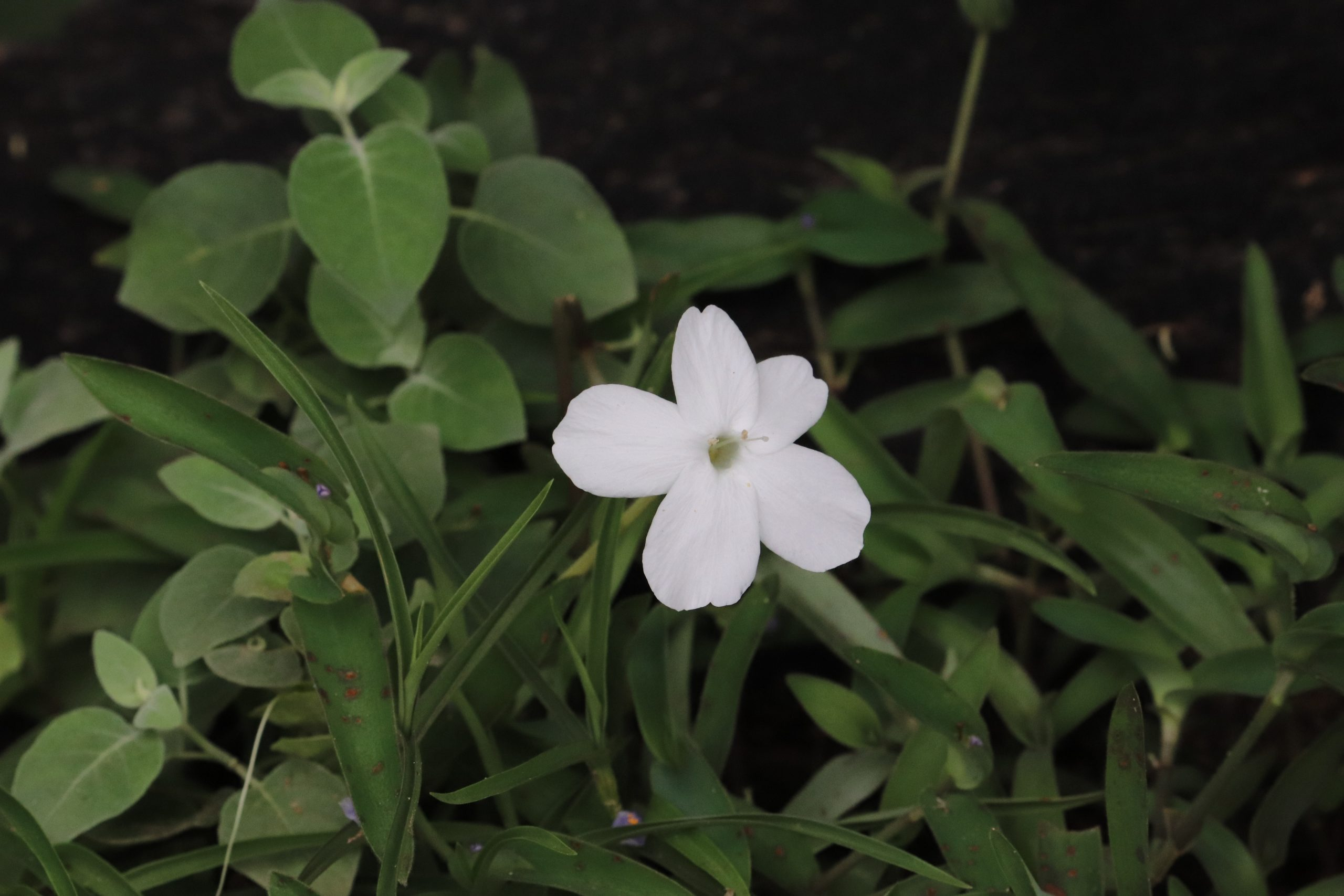 A white flower in a park