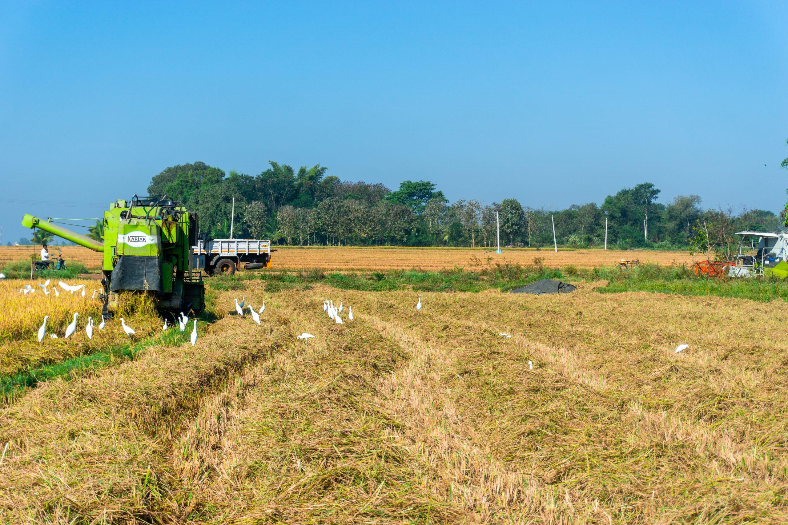 An harvester cutting crops