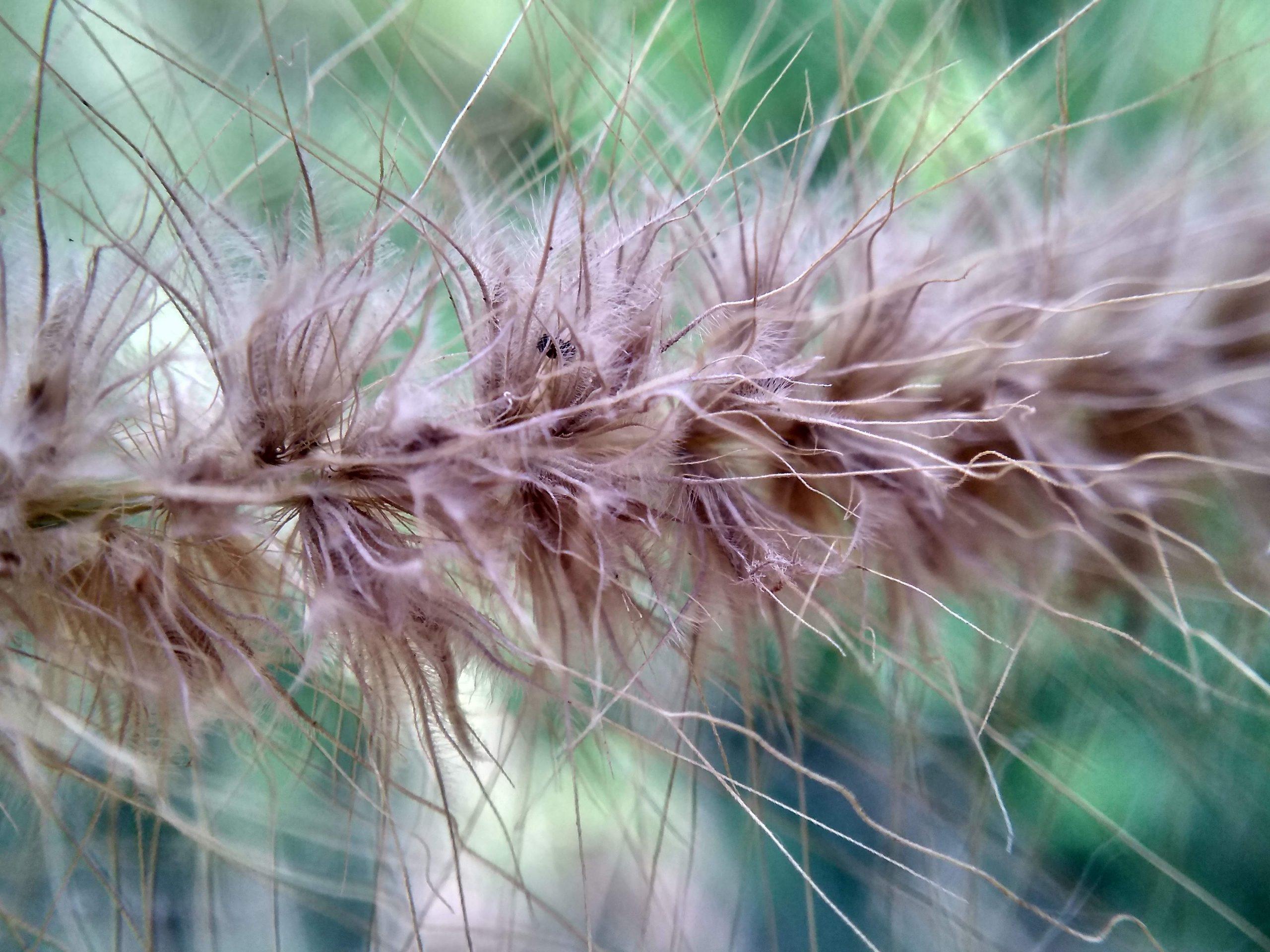 An unique plant