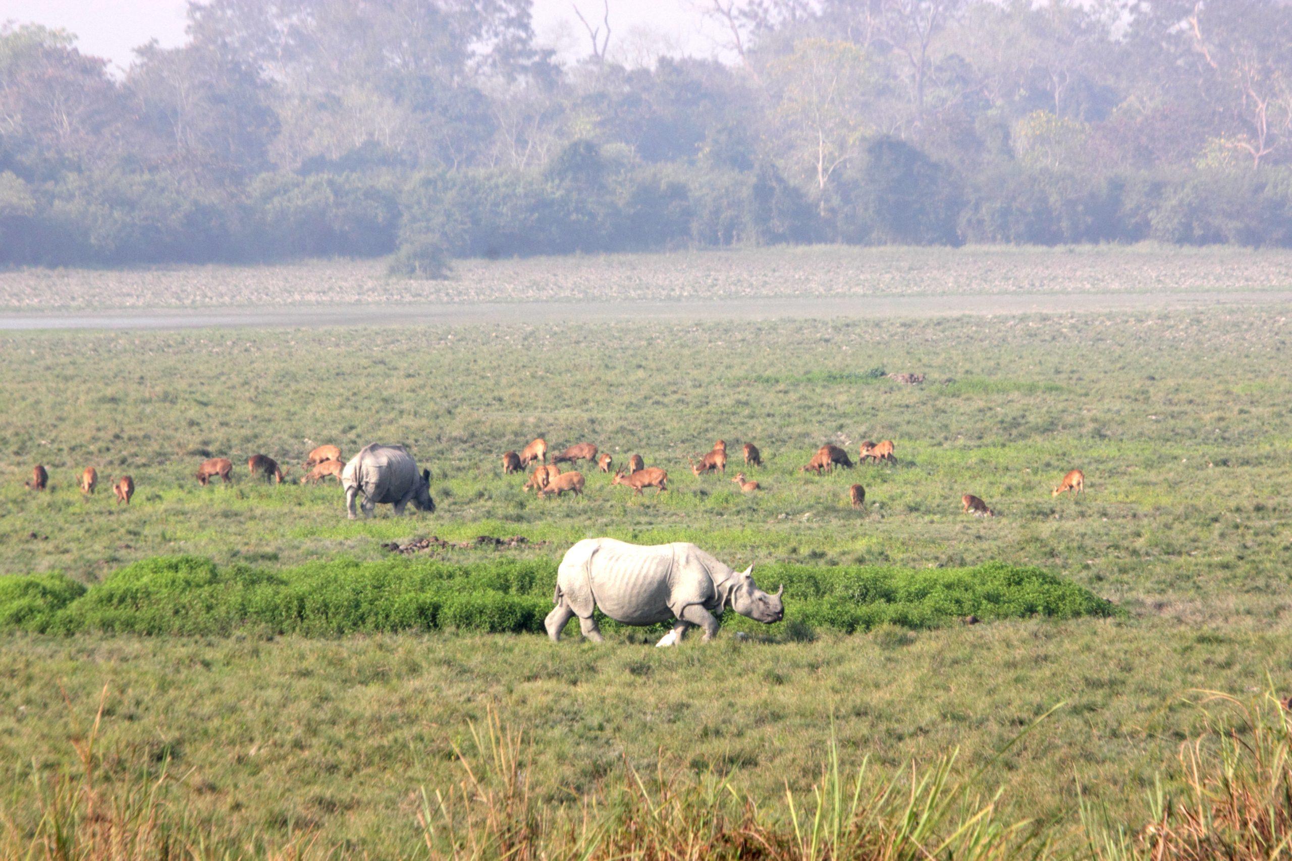 Animals at nature reserve