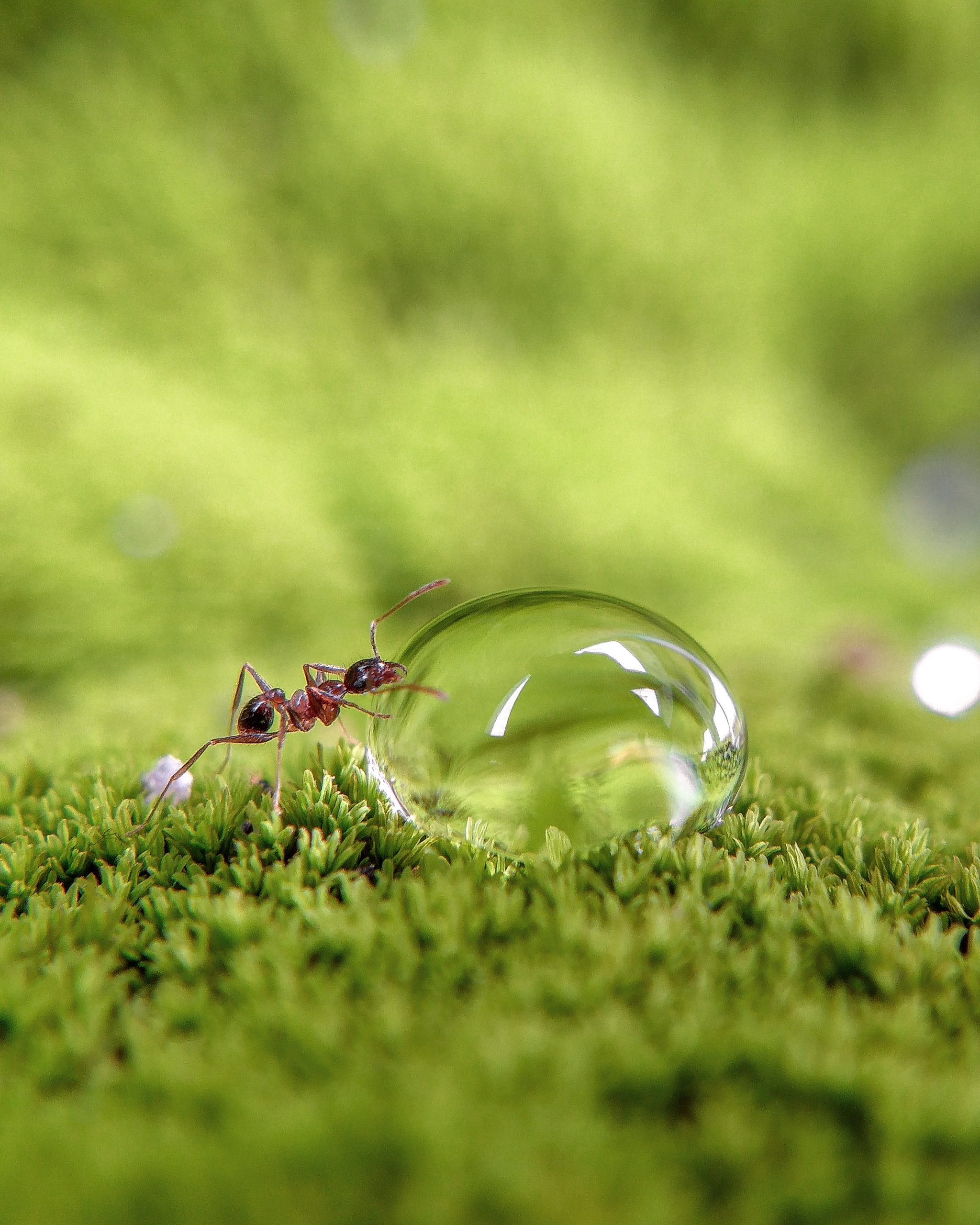 Ant and Bubble
