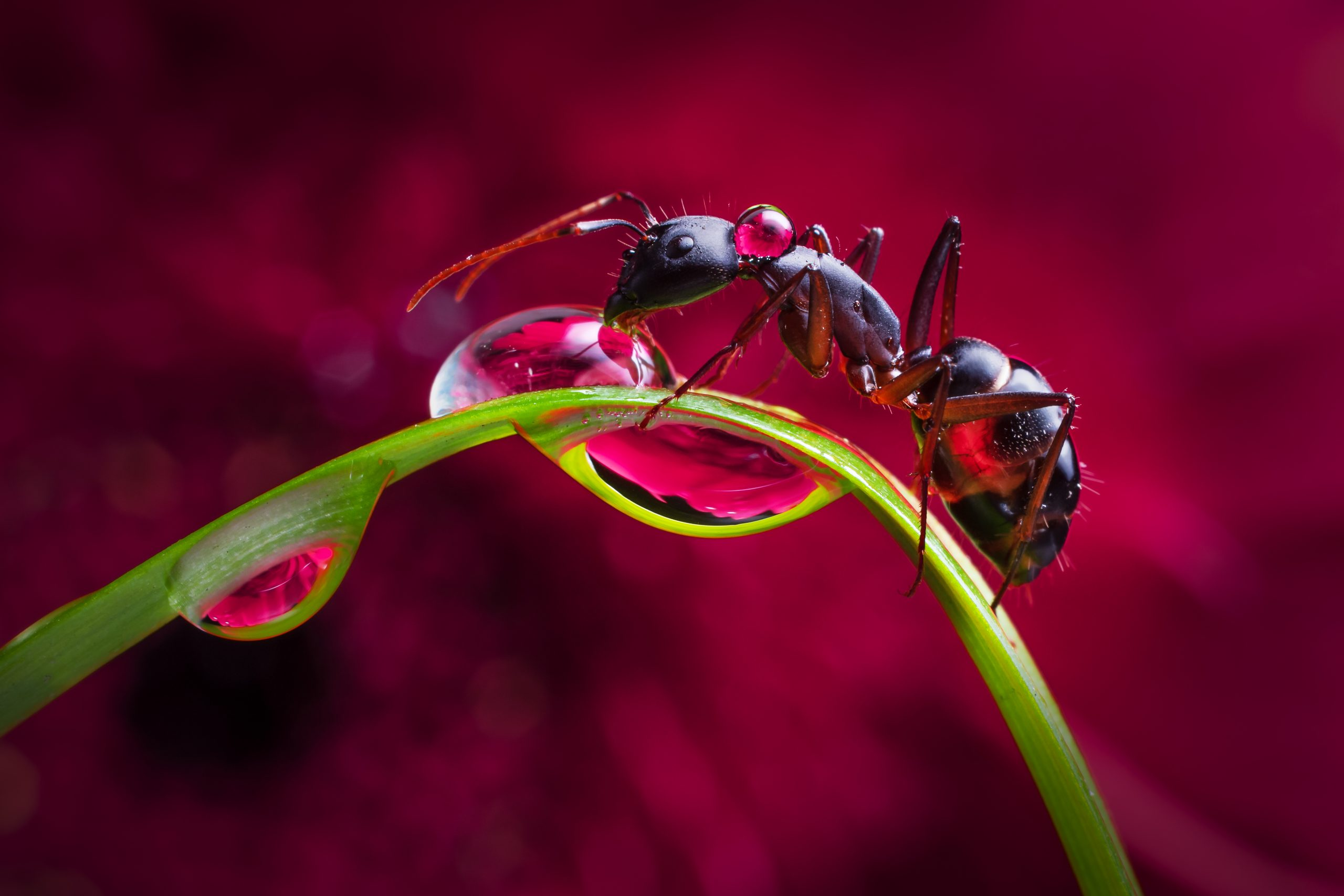 ant on a plant stem