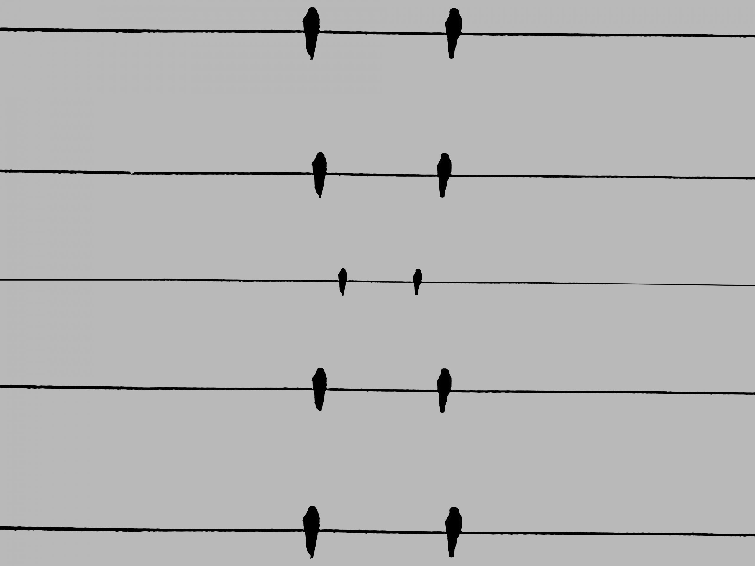 silhouette of birds on lines