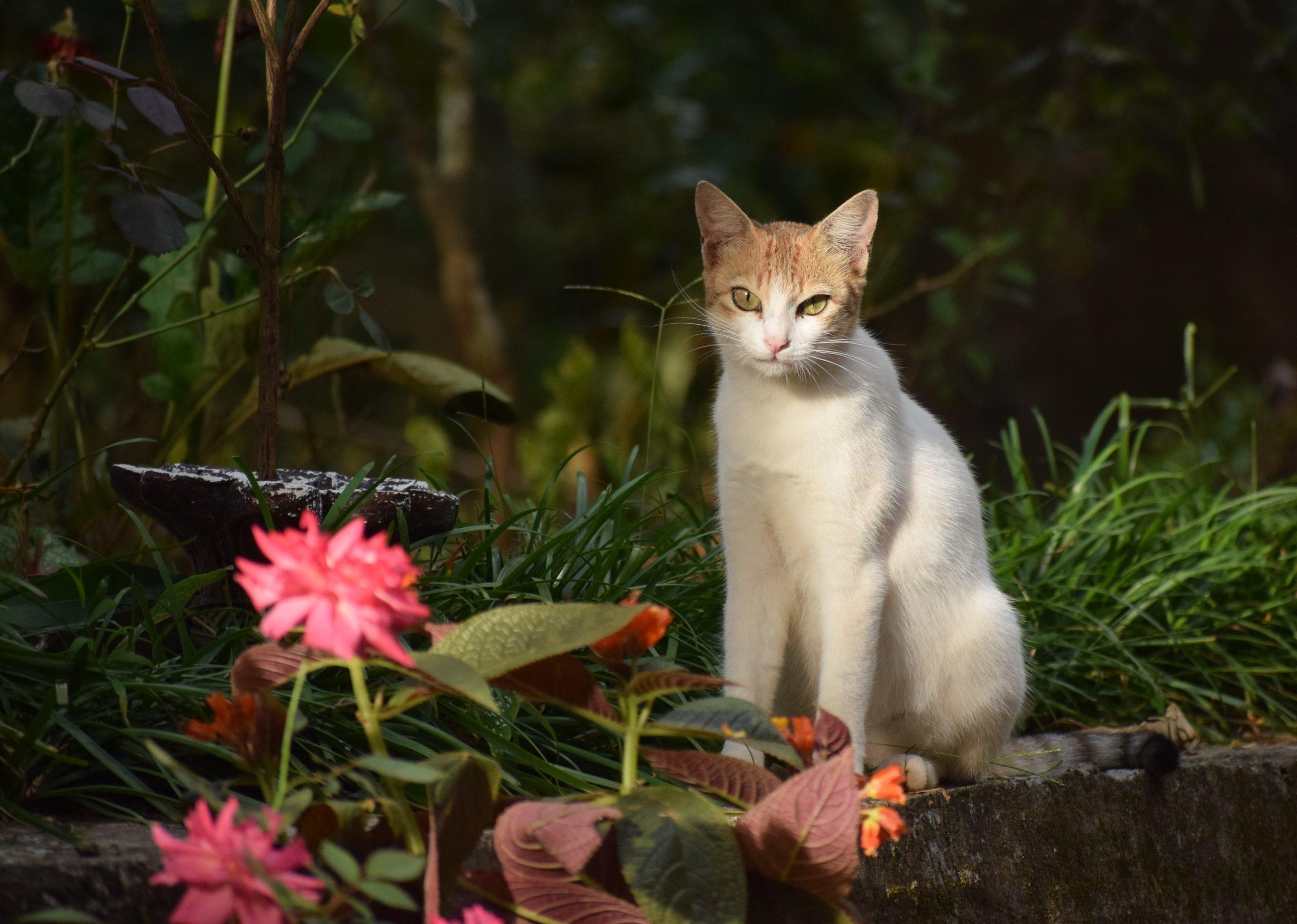 Cat amidst nature.