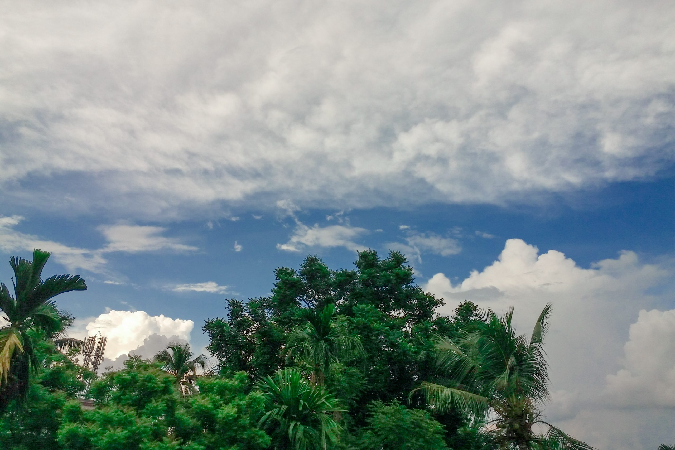 Clouds over palm trees