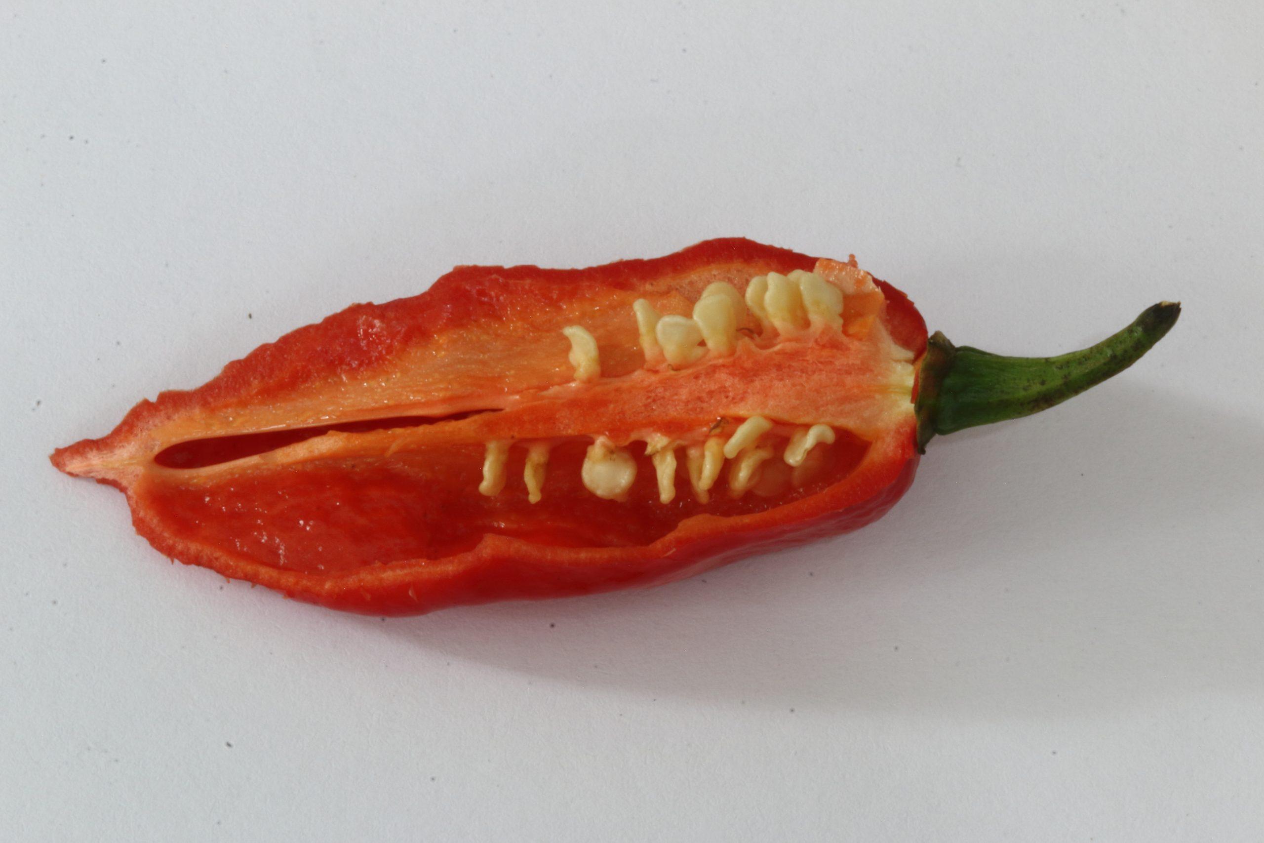 chilli